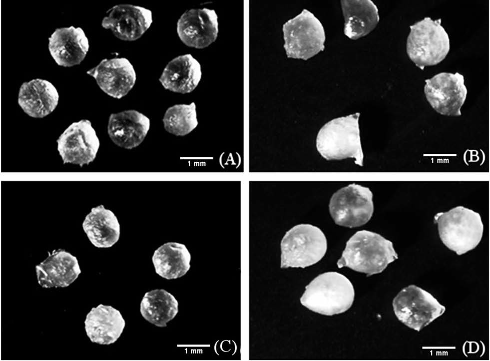 Snímky ze stereoskopického mikroskopu (zvětšeno 7krát) (A) CH1,75, (B) CH1,75P, (C) CH1,75L, (D) CH1,75PL