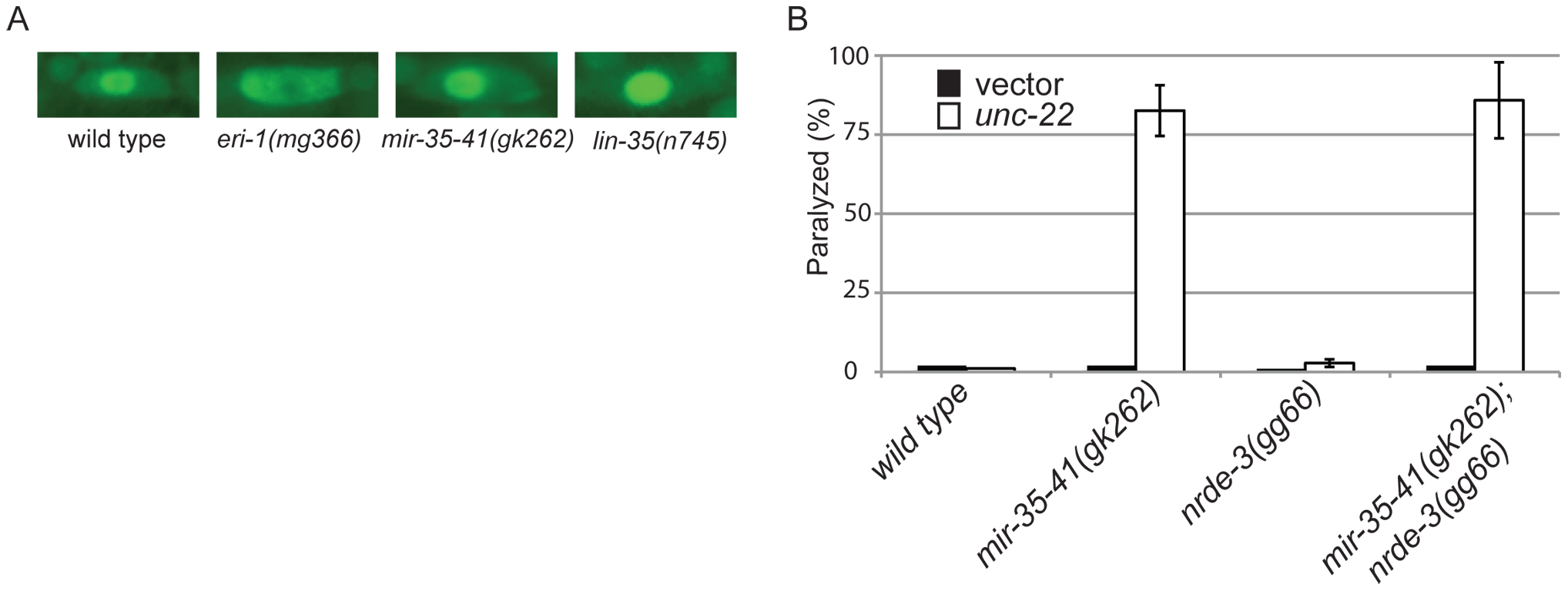 The RNAi hypersensitivity of <i>mir-35-41</i> mutants is independent of <i>nrde-3</i> activity.