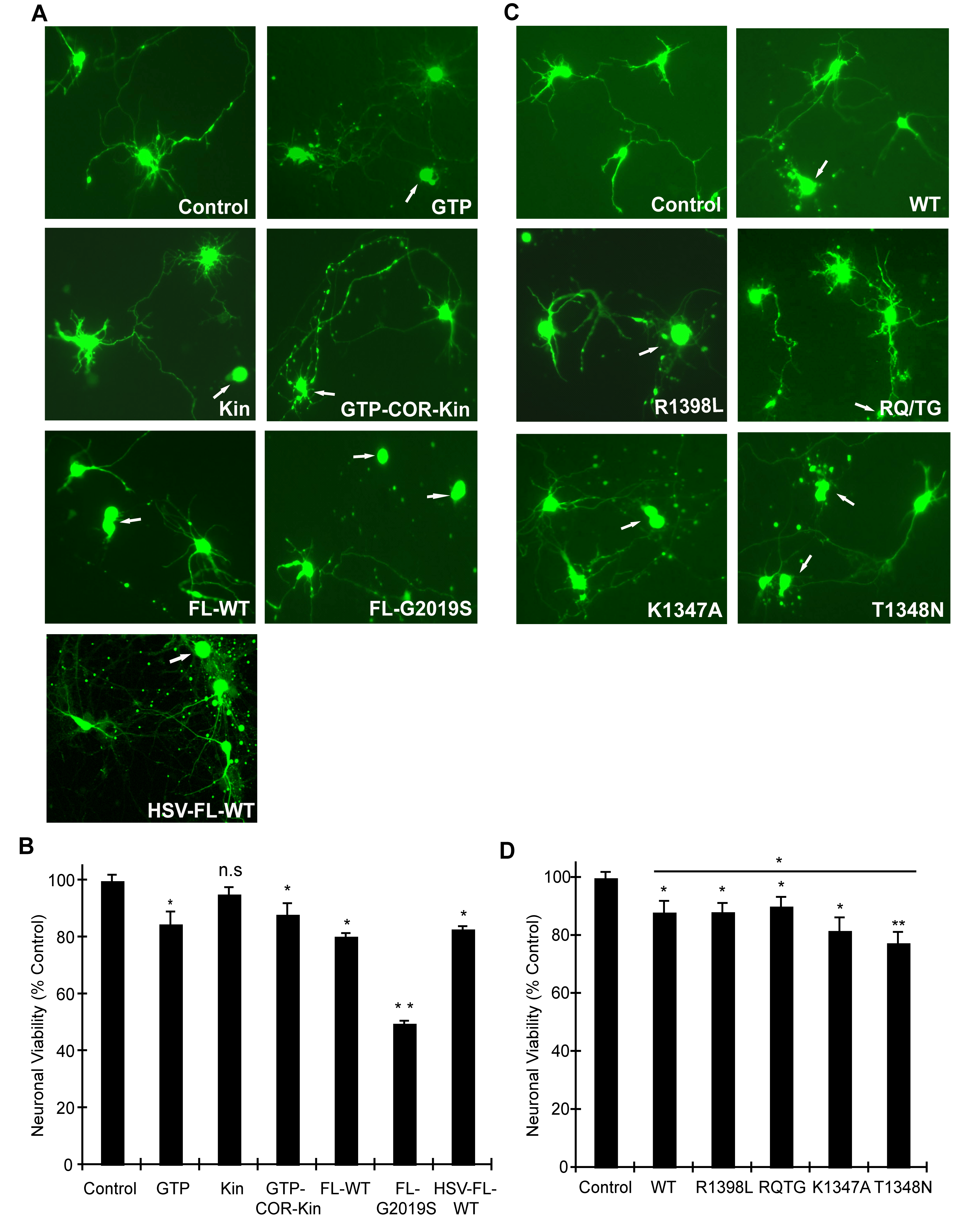 GTPase activity modulates LRRK2-induced neuronal toxicity.