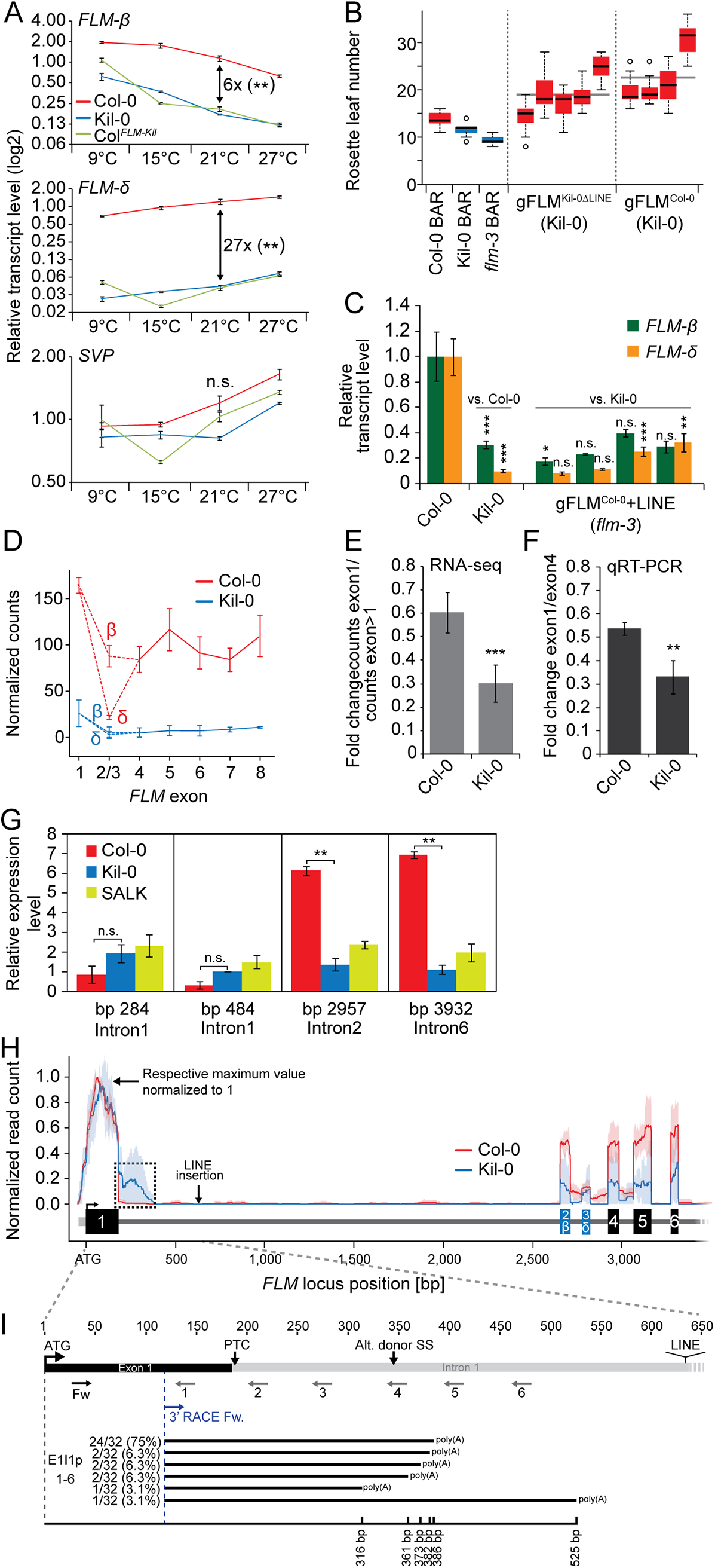 The large insertion in the first intron affects splicing efficiency and gene expression of <i>FLM</i>.