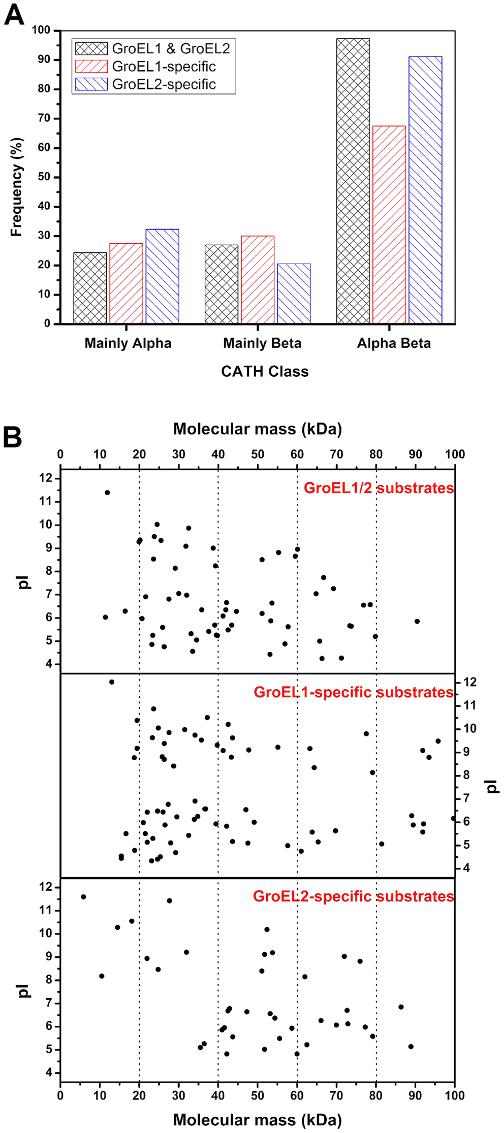 Substrate features of GroEL1 and GroEL2.