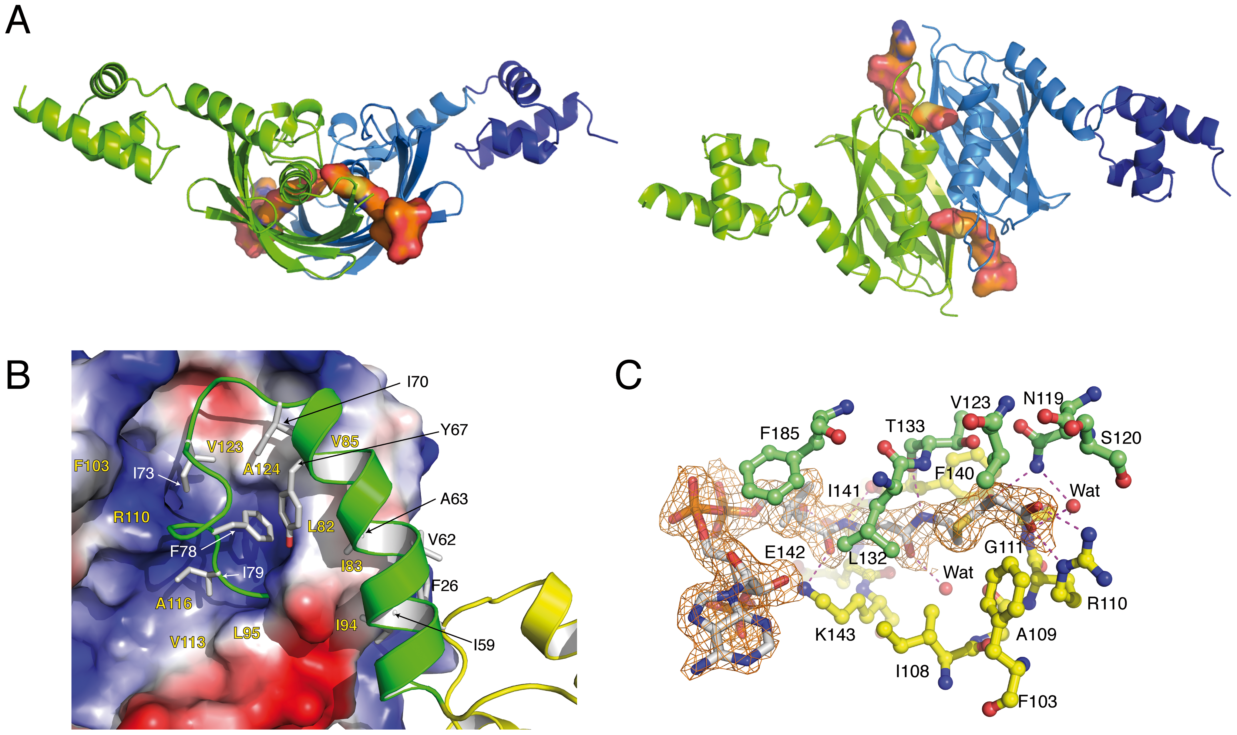 Overall structures of the malonyl-CoA-bound forms of <i>Sa</i>FapR.