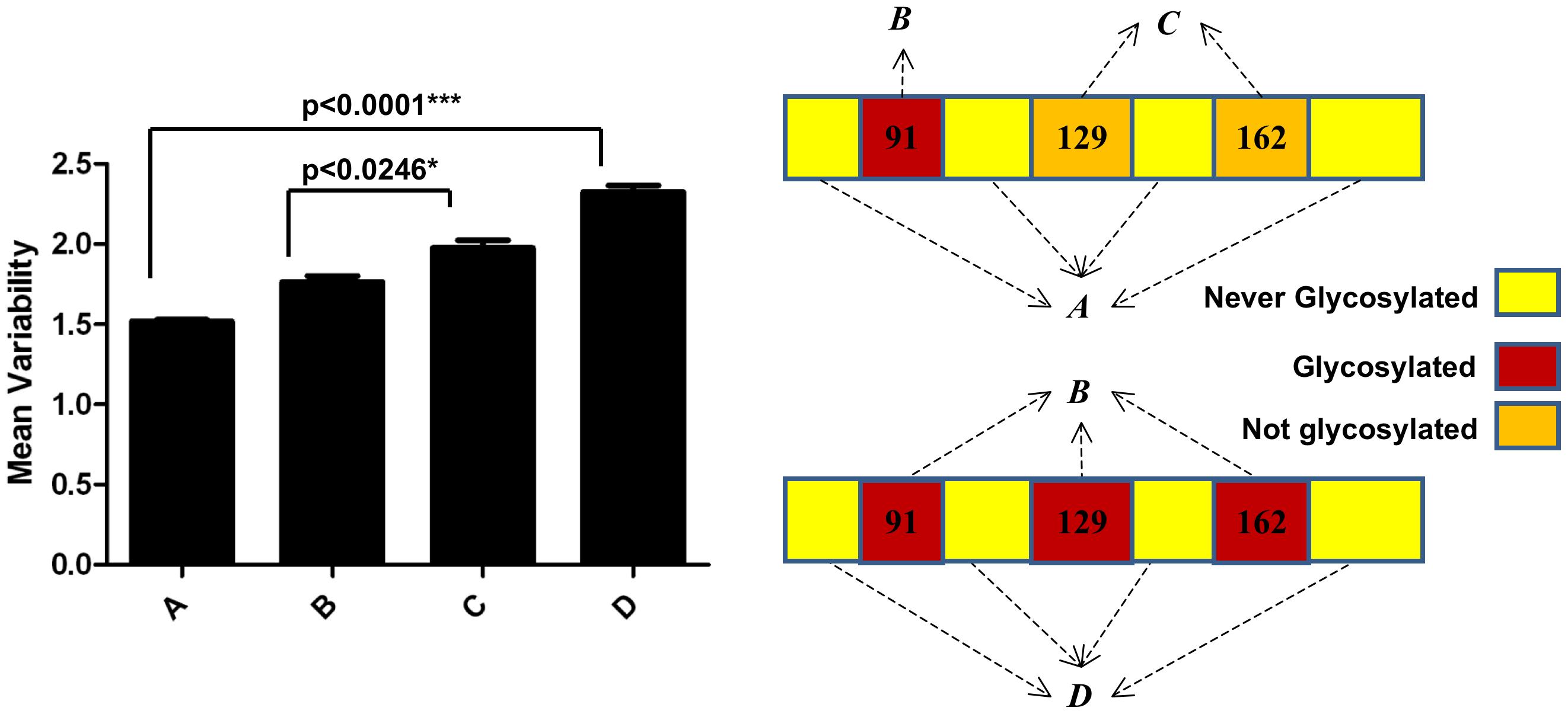 Mean values of variability of H1 globular domain.