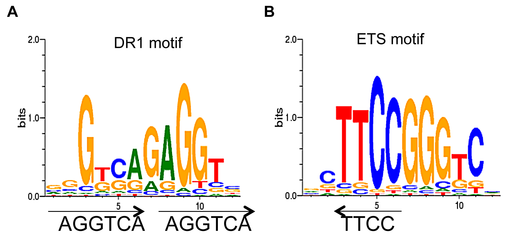 <i>De novo</i> motif analysis of TR4 peaks located at the proximal promoter.