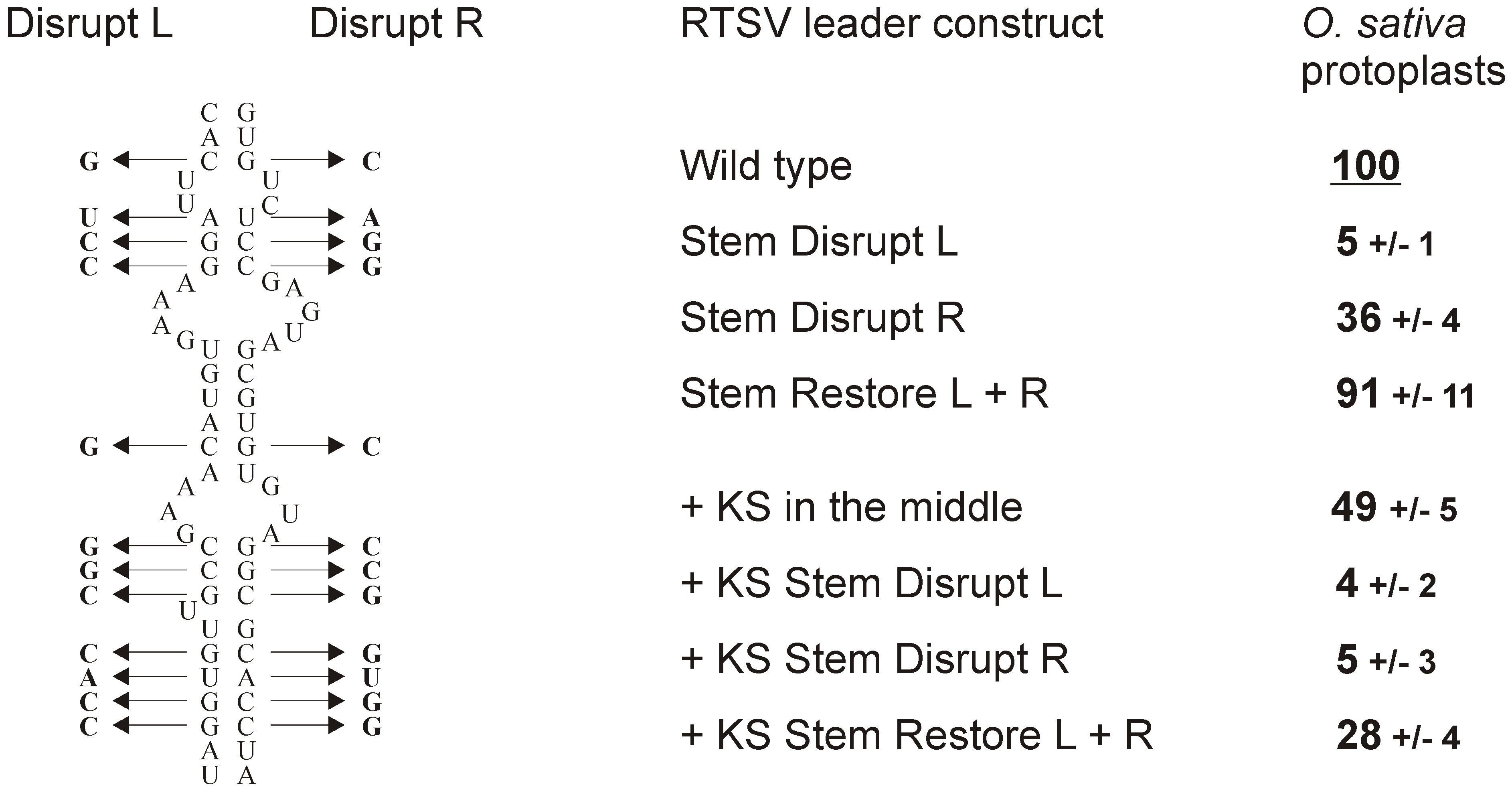 Integrity of the stem base secondary structure is essential for RTSV shunting.