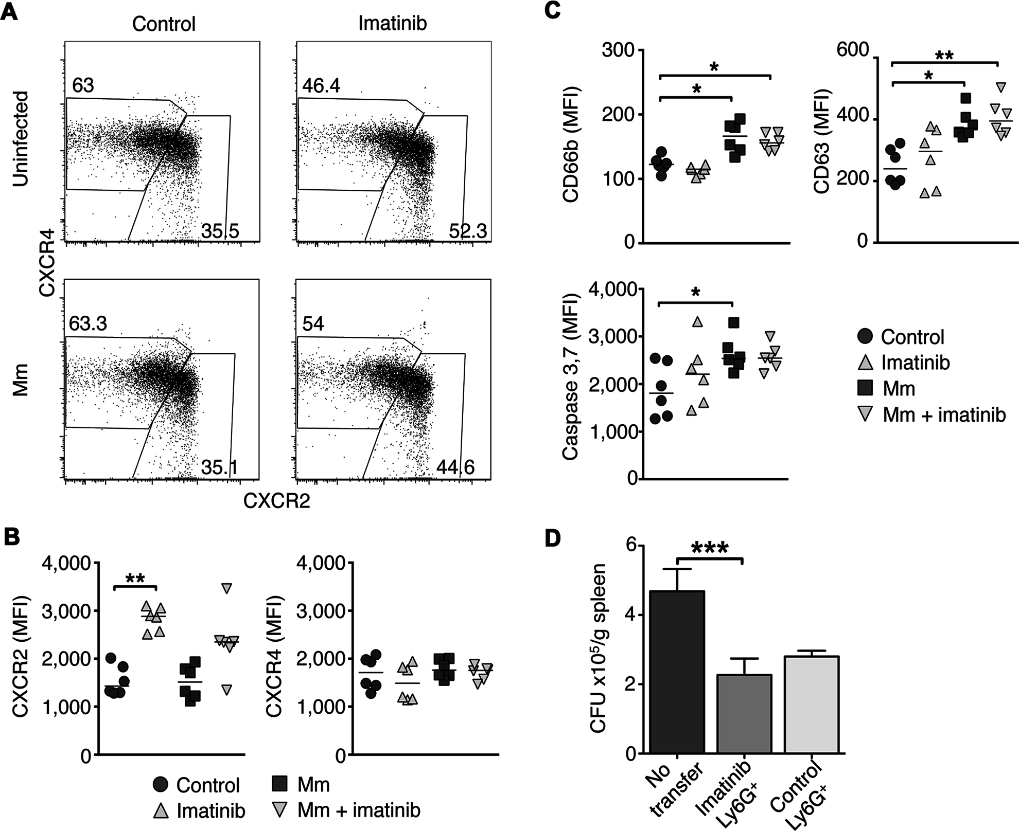 Effects of Imatinib on CXCR2 expression, activation, and apoptosis in neutrophils.
