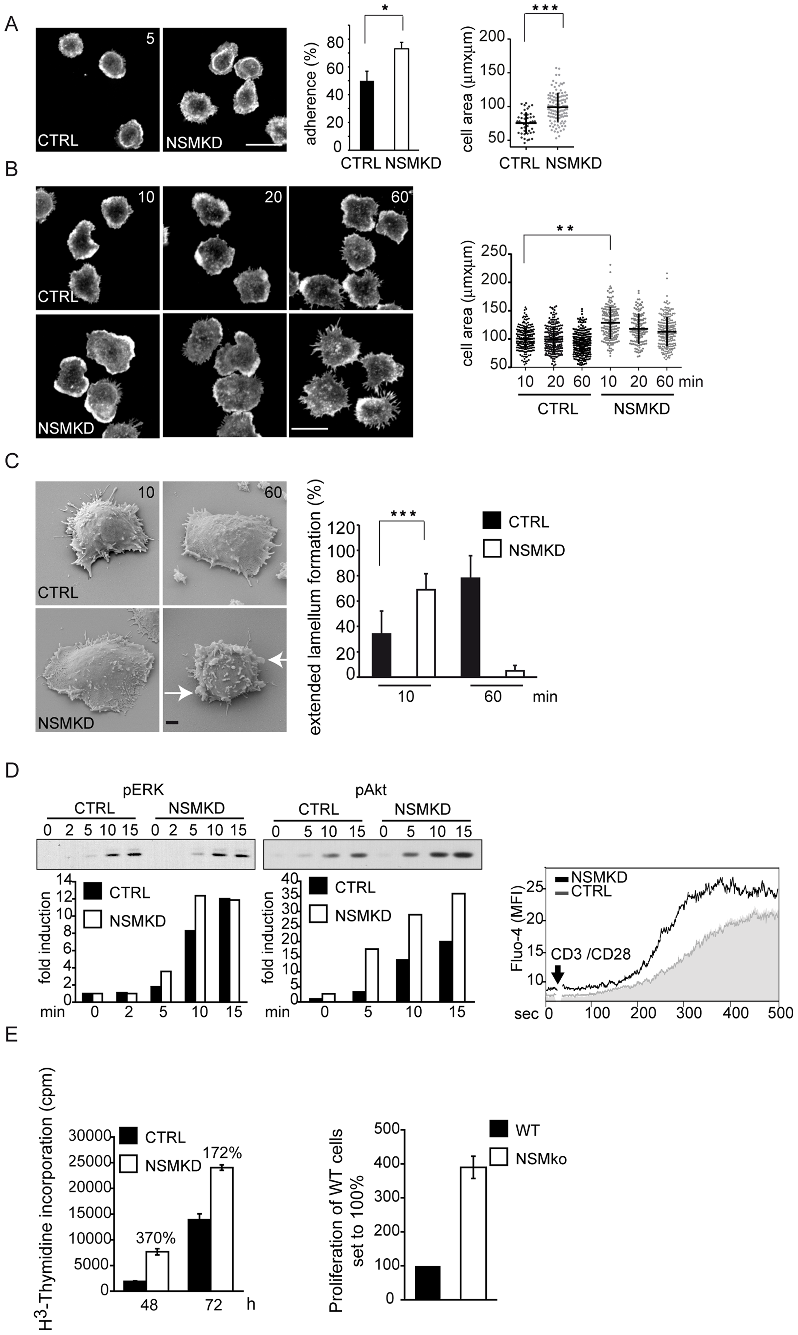 NSM acts to dampen initiation of T cell activation.