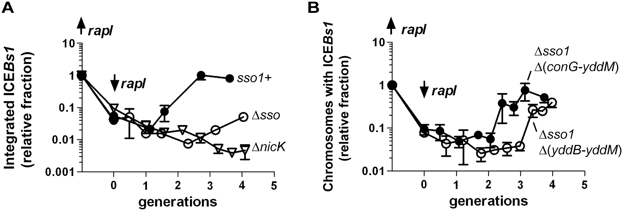 Sso activity is important for maintenance of ICE<i>Bs1</i> after excision in growing cells.