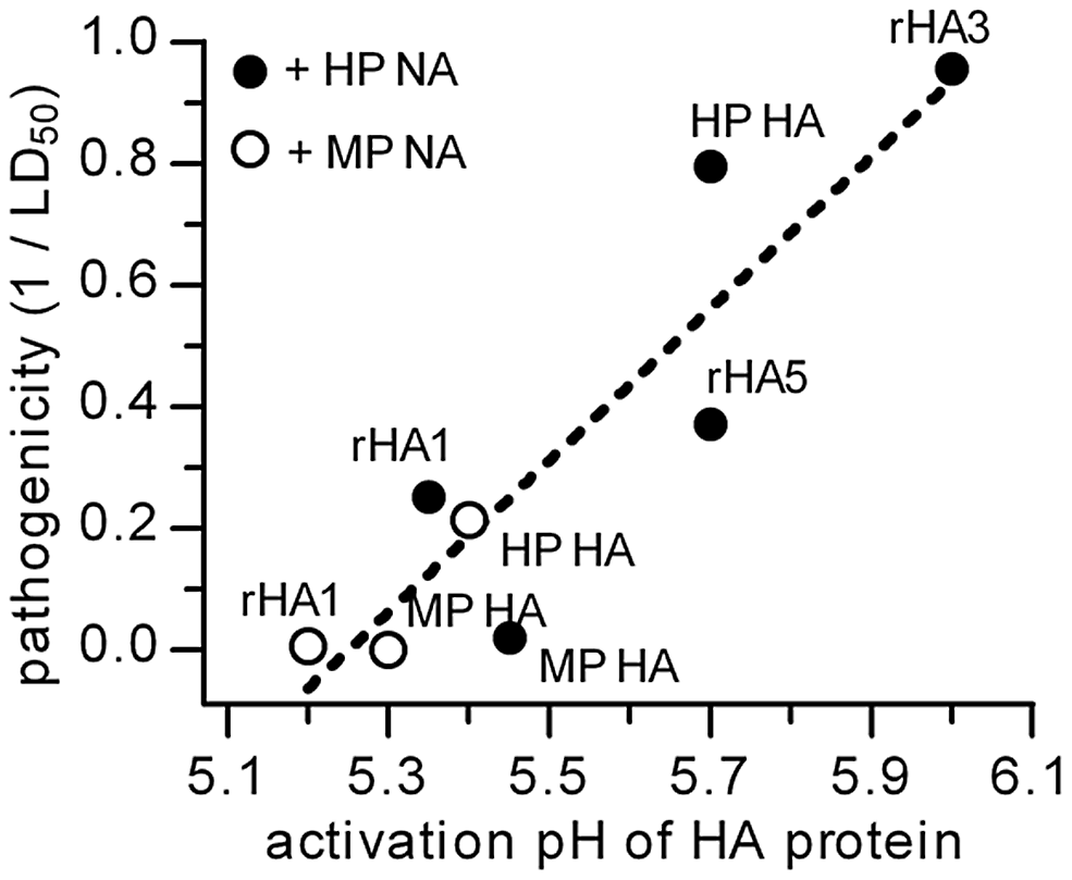 HA activation pH and pathogenicity in chickens.