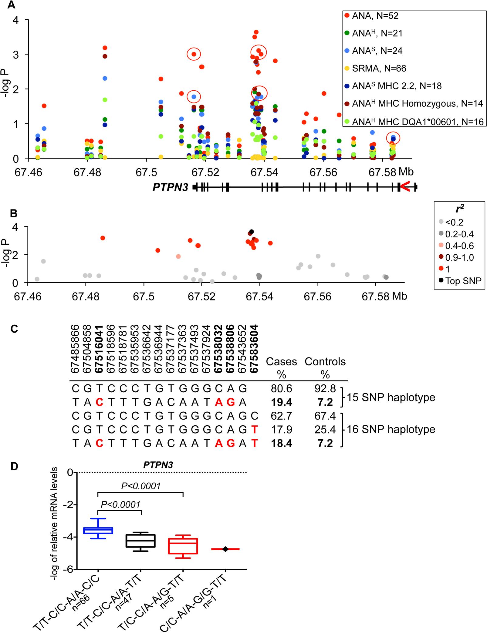 Genetic analysis of chromosome 11 locus and <i>PTPN3</i> expression.