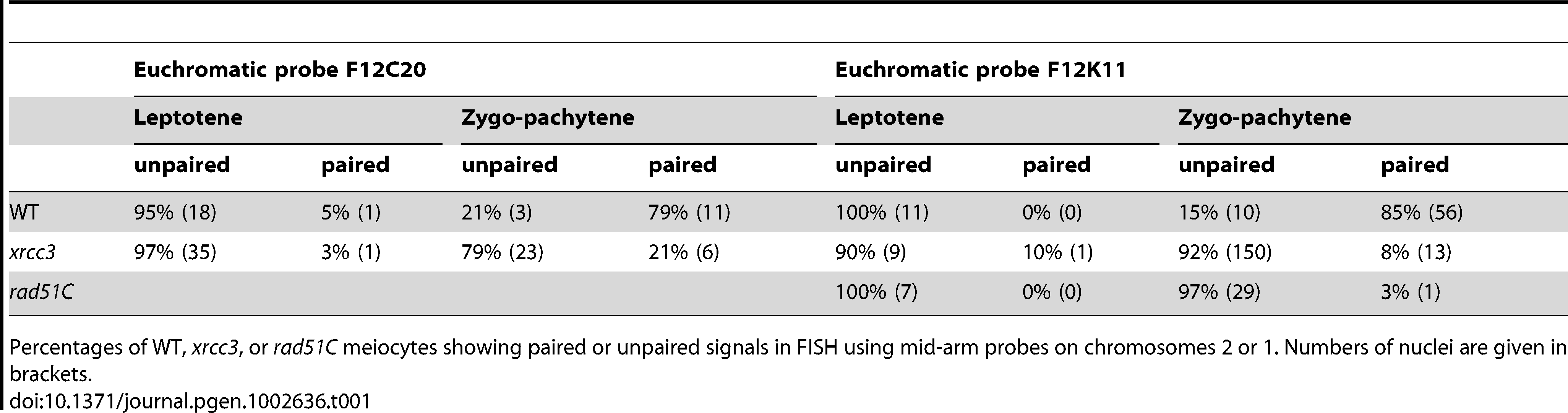 Chromosome arm pairing during meiotic prophase I in WT, <i>xrcc3</i>, and <i>rad51C</i> plants.