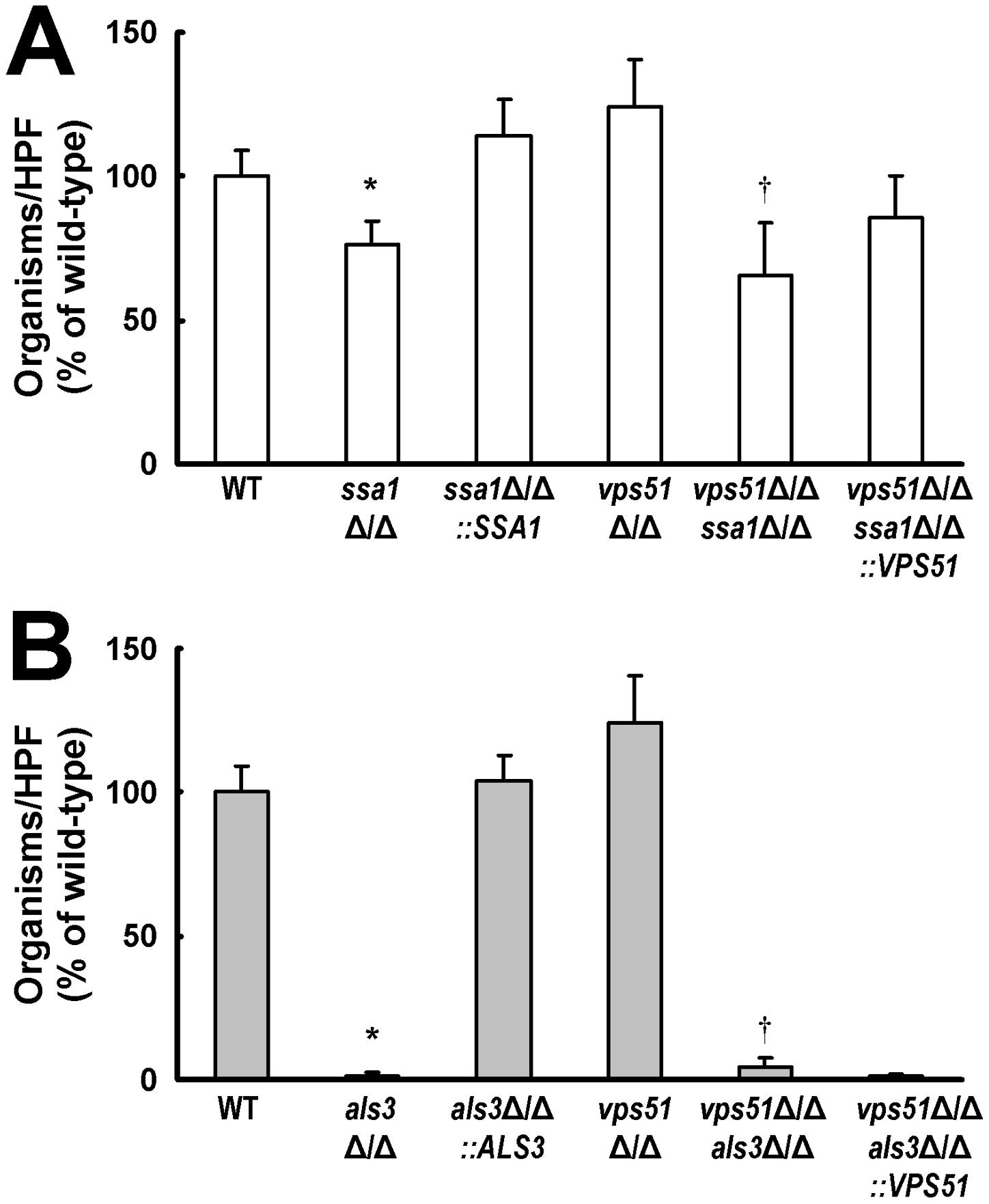 Deletion of <i>SSA1</i> or <i>ALS3</i> reduces HBMEC endocytosis of <i>C. albicans.</i>