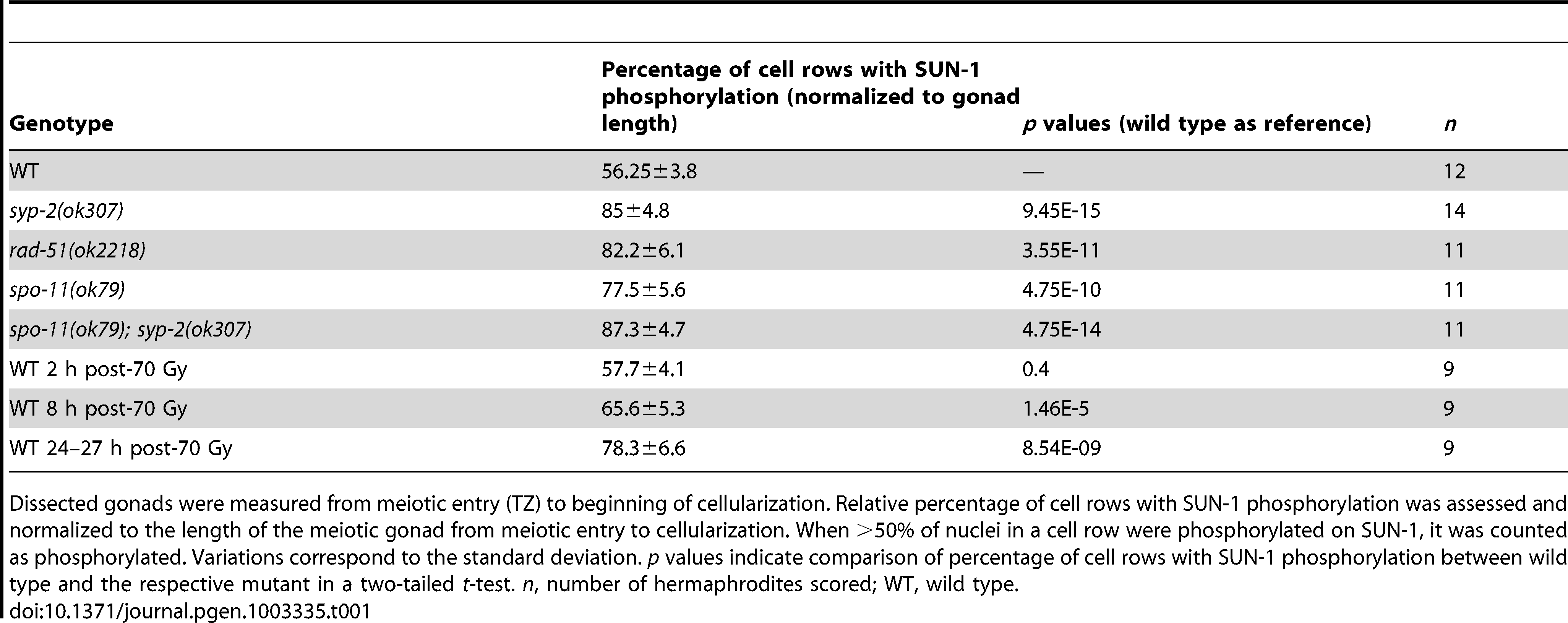 Length of SUN-1 phosphorylation in wild-type and mutant backgrounds.