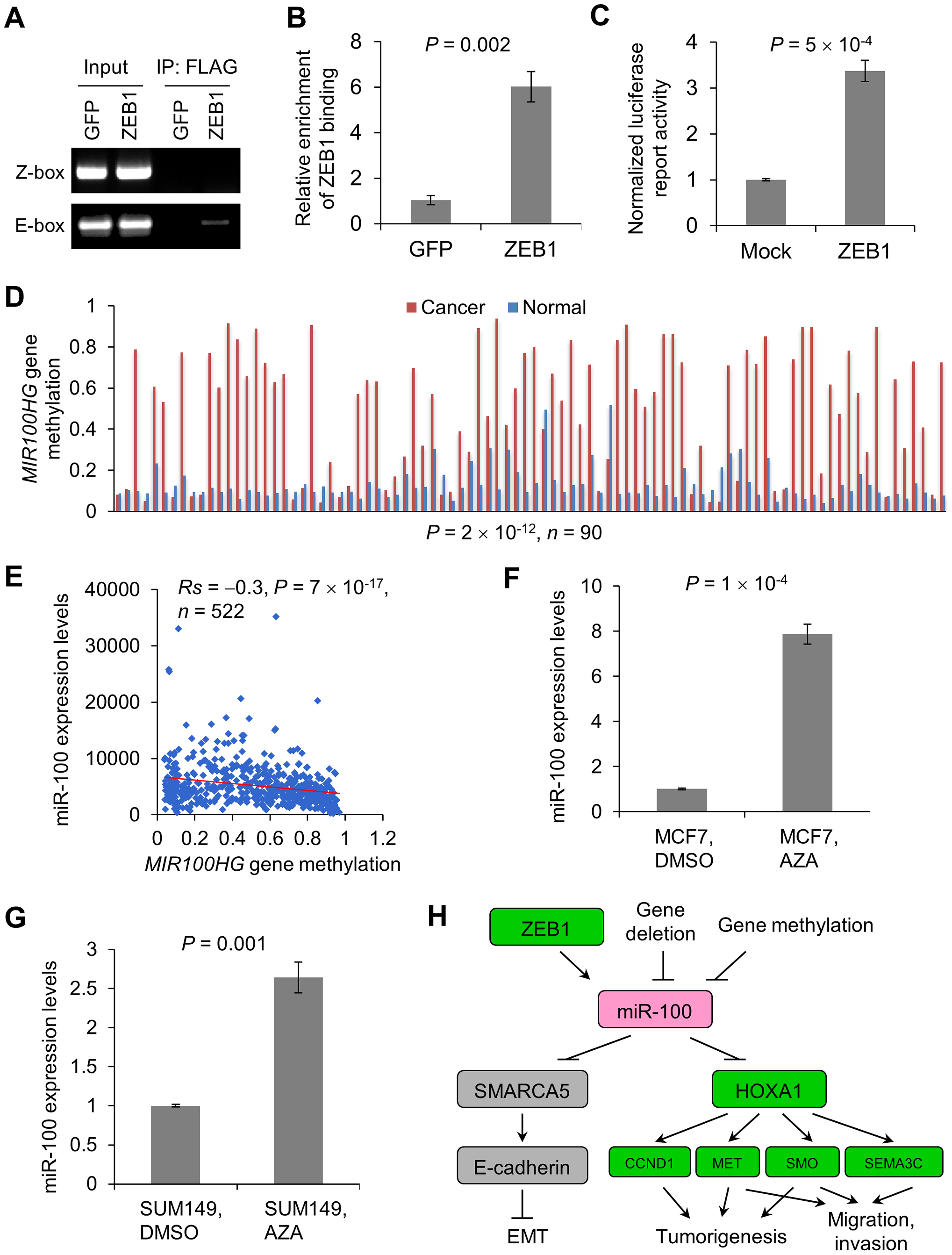 Regulation of miR-100 expression by ZEB1 and the methylation of the host gene <i>MIR100HG</i>.