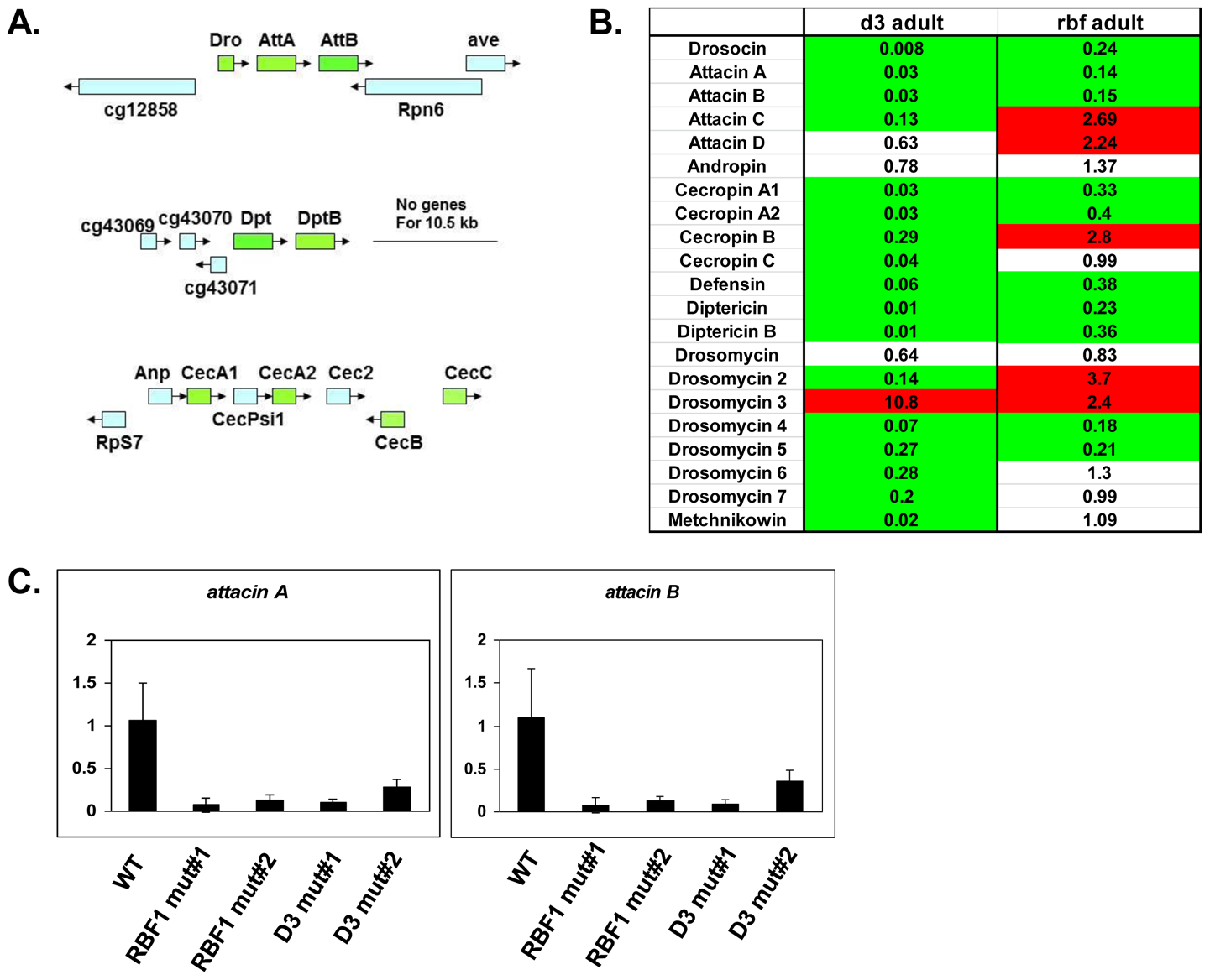 RBF1 and dCAP-D3 activate basal transcript levels of genes coding for Antimicrobial Peptides (AMPs).