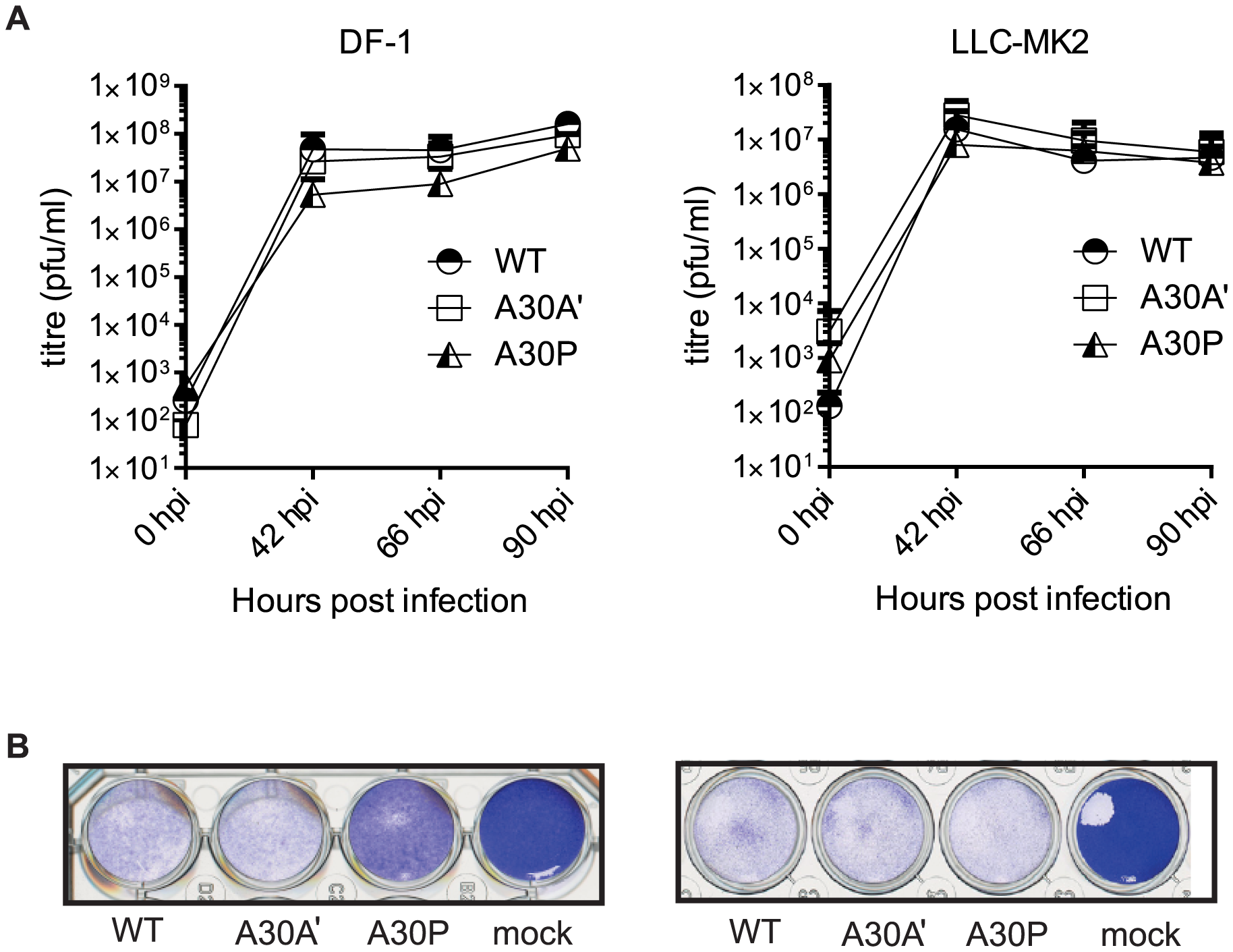 PRF does not impact viral accumulation in avian and mammalian cell lines.