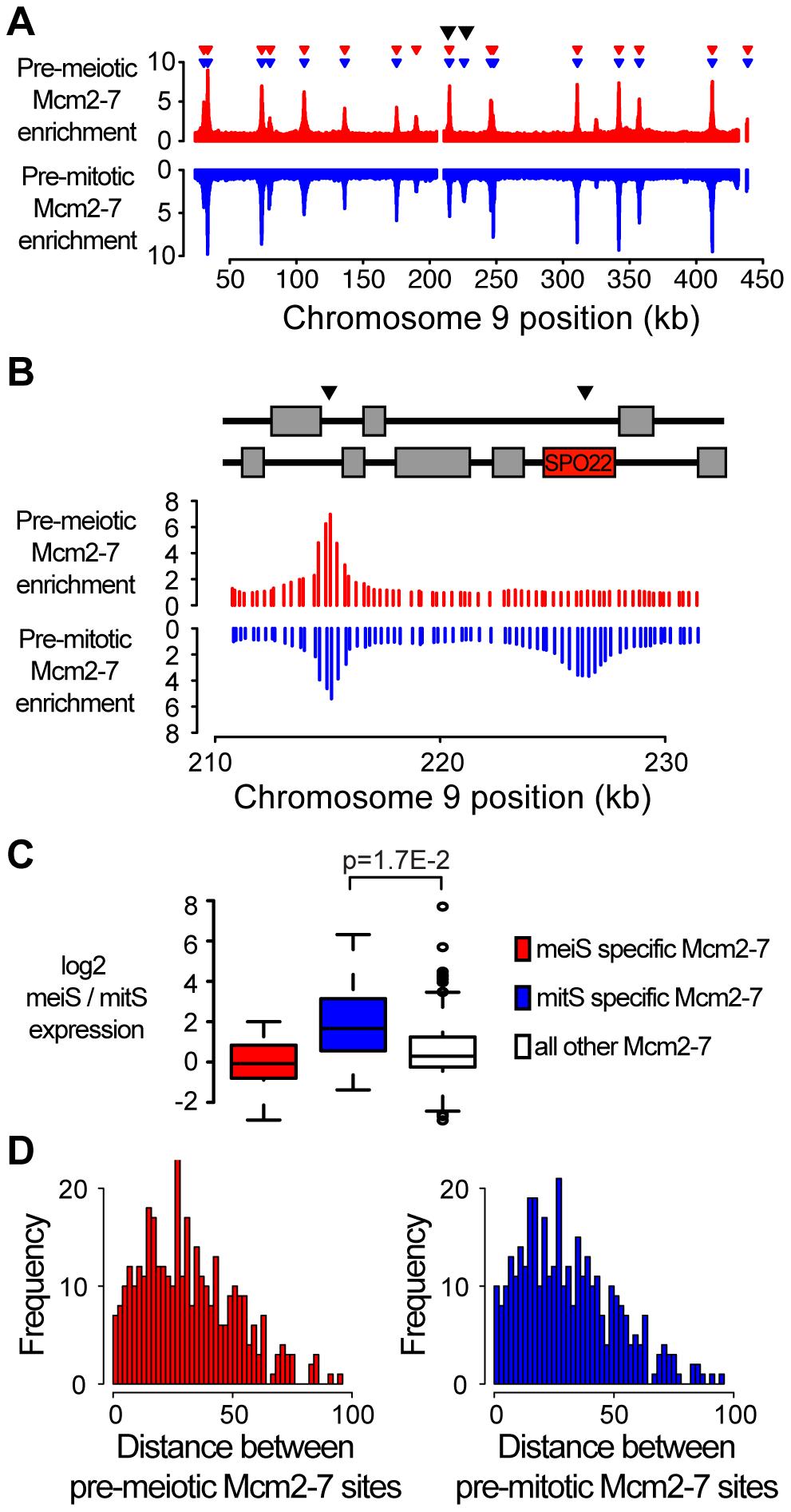 Transcription influences origin selection.