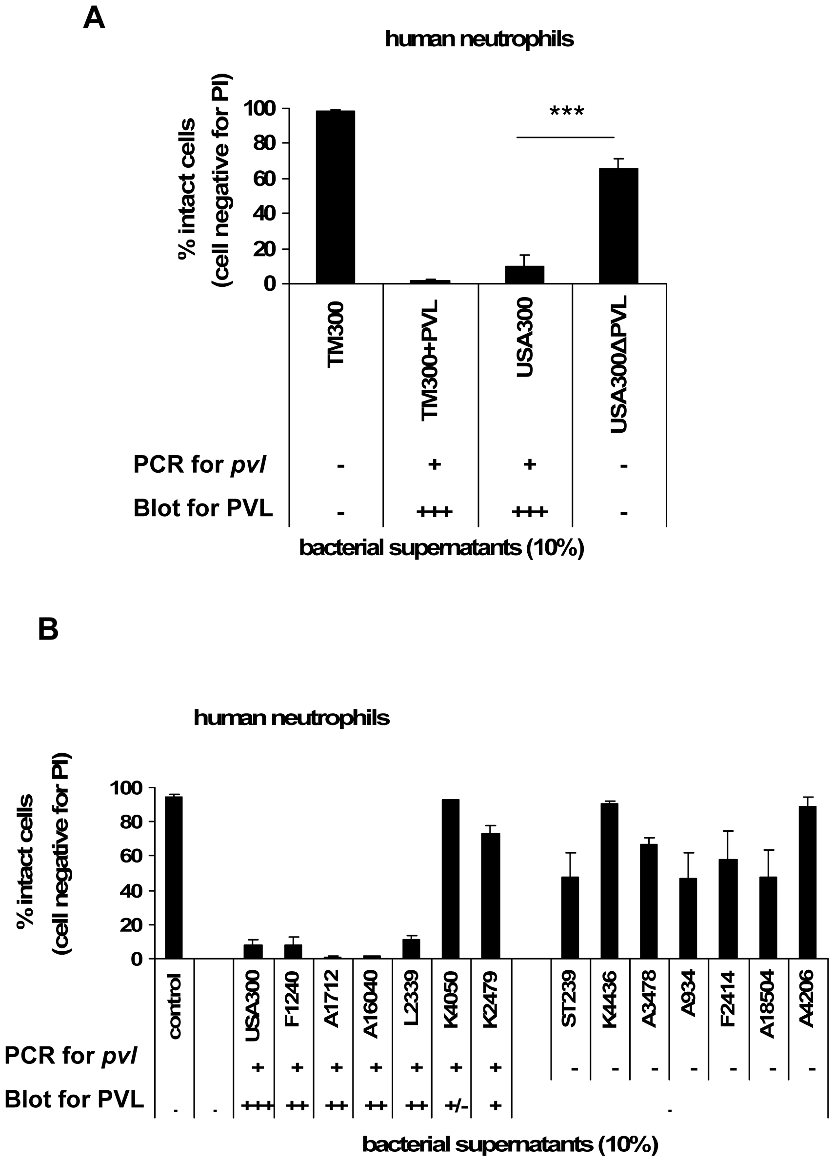 The cytotoxic effect of bacterial culture supernatants is dependent on PVL expression.