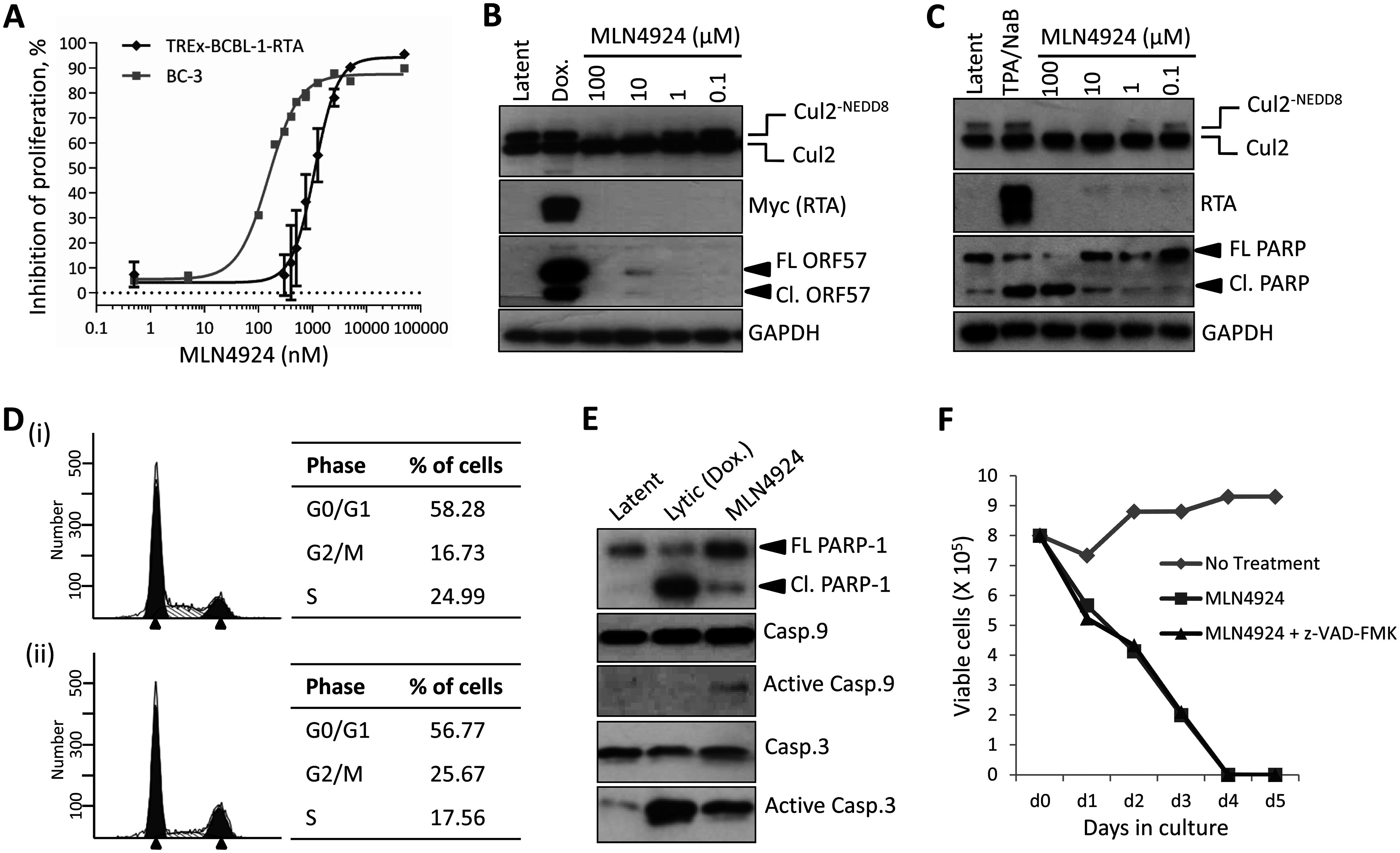 Inhibition of NEDDylation is cytotoxic in PEL cells.