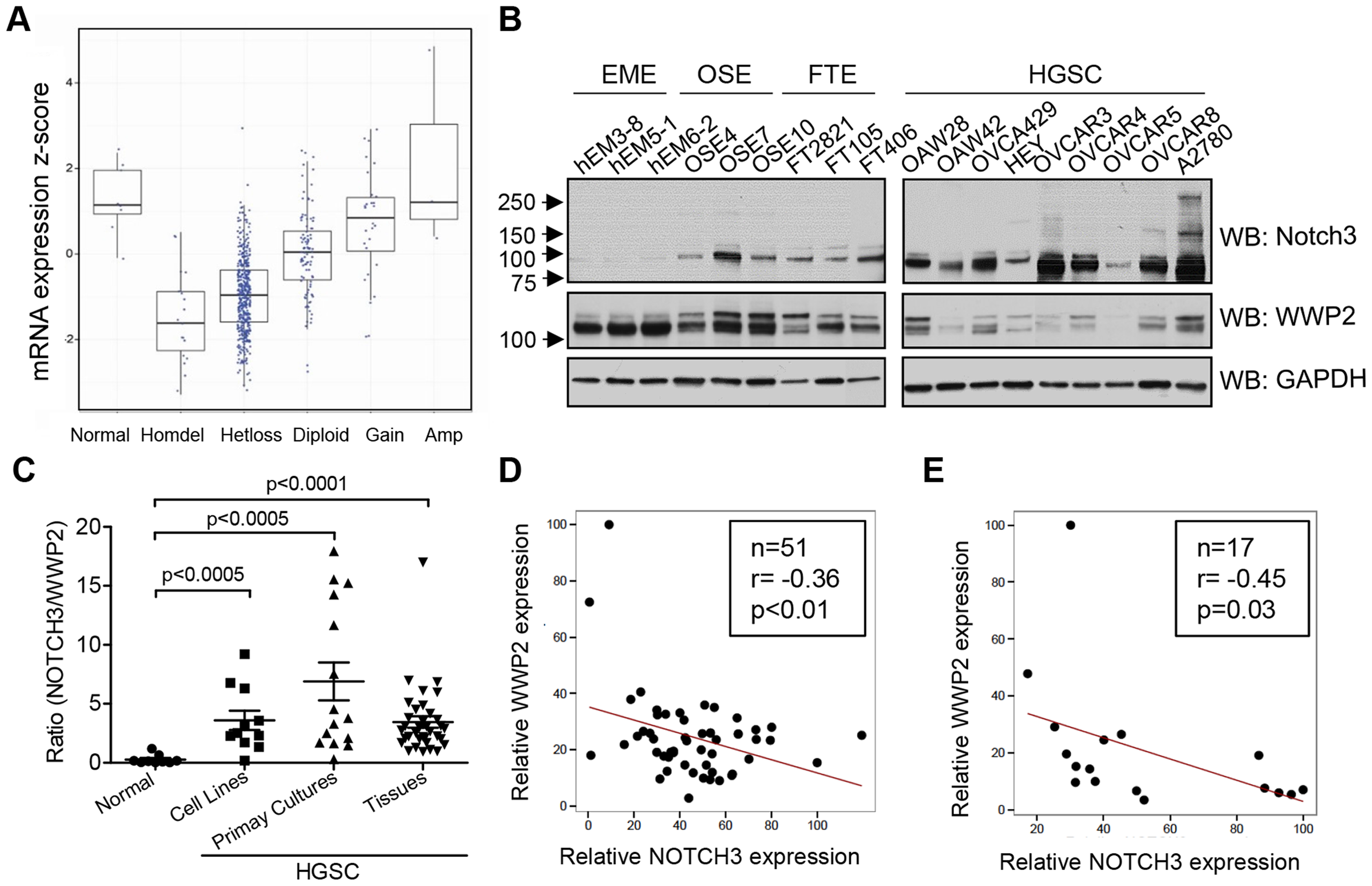 WWP2 is down-regulated in ovarian carcinomas.