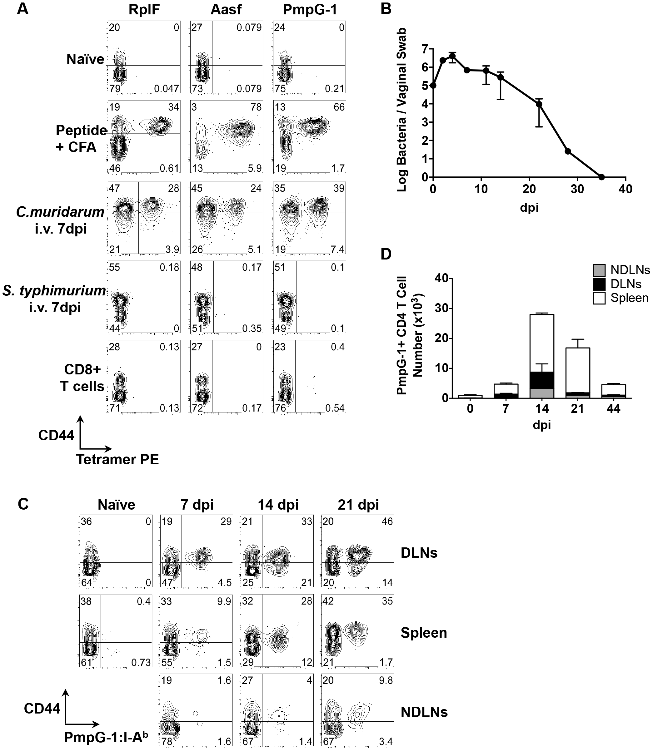Kinetics of antigen-specific CD4<sup>+</sup> T cell expansion after <i>C. muridarum</i> intravaginal (i.vag.) infection.
