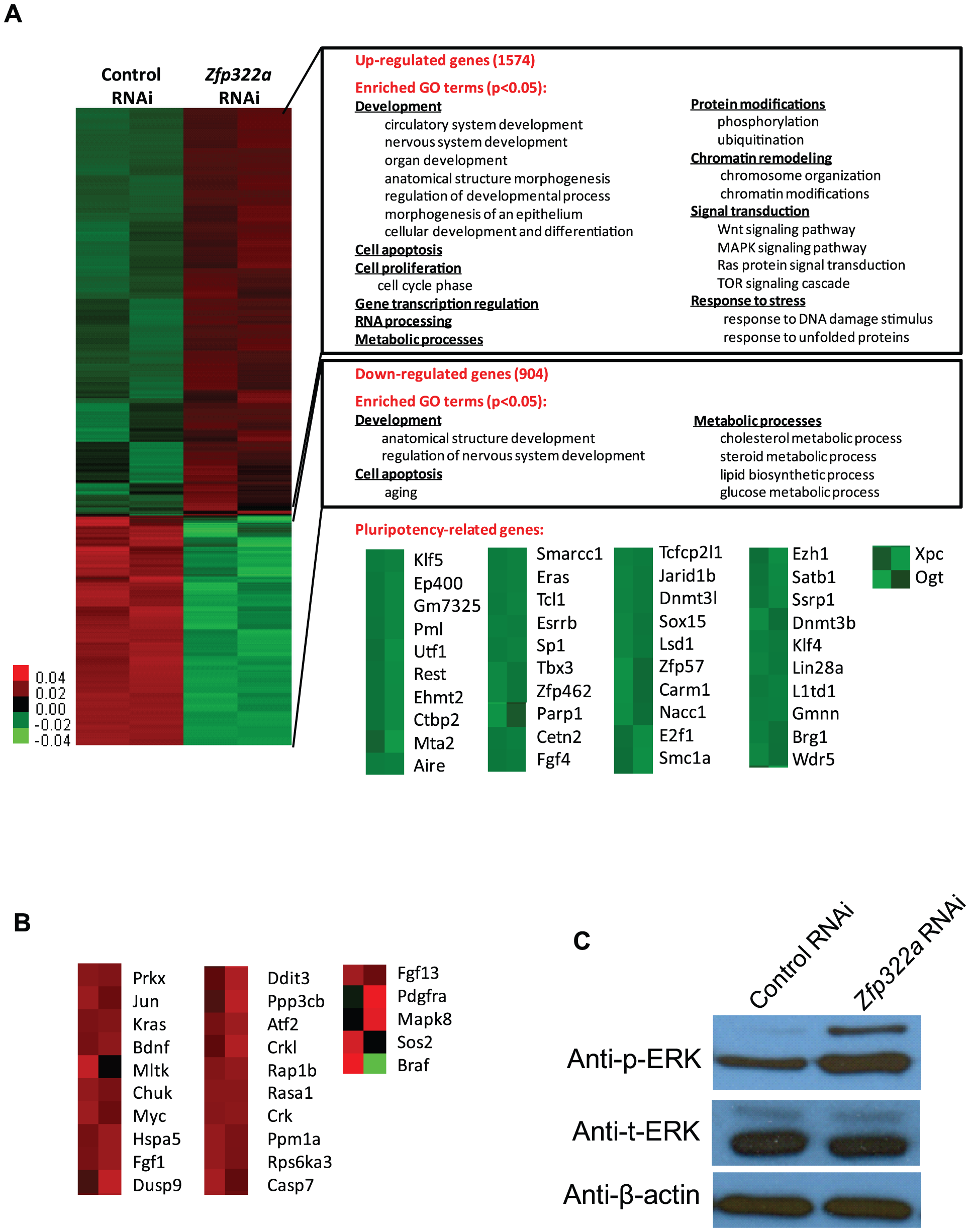 Changes of global gene expression upon <i>Zfp322a</i> knock-down in ES cells.