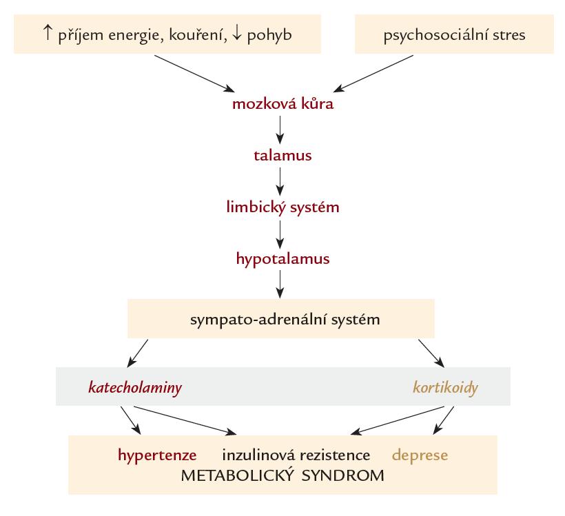 Hypotéza patofyziologie působení stresu na vznik metabolického syndromu a deprese. Zevní vlivy (např. psychický stres) je přenášen z mozkové kůry do talamu přes limbický systém do hypotalamu, kde aktivuje centrální části sympatického nervového systému a dřeň nadledvin. Prostřednictvím neuromediátorů katecholaminů a glukokortikoidů se rozvíjí metabolický syndrom a depresivní porucha.