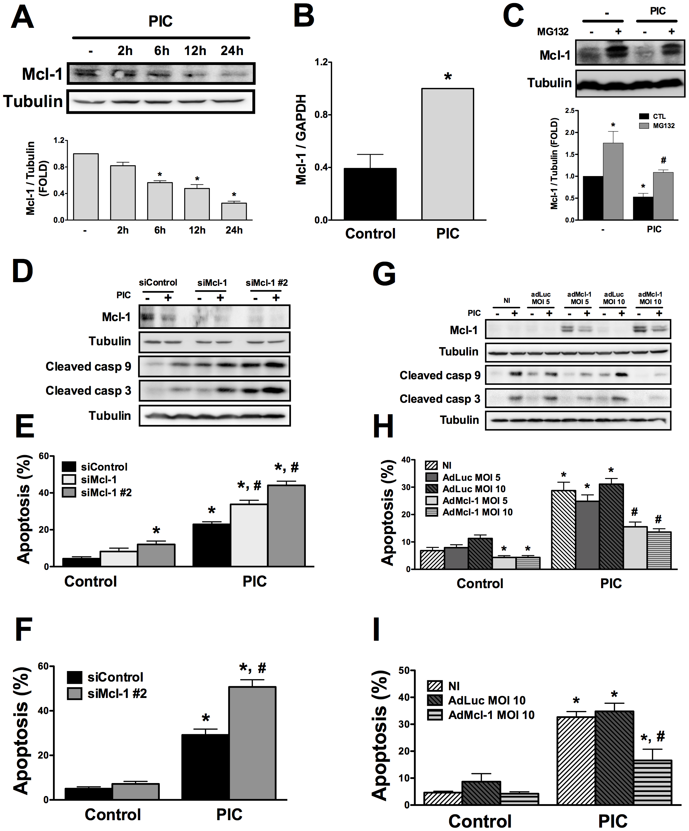 Mcl-1 protein expression is decreased by internal dsRNA and its modulation regulates beta cell apoptosis.