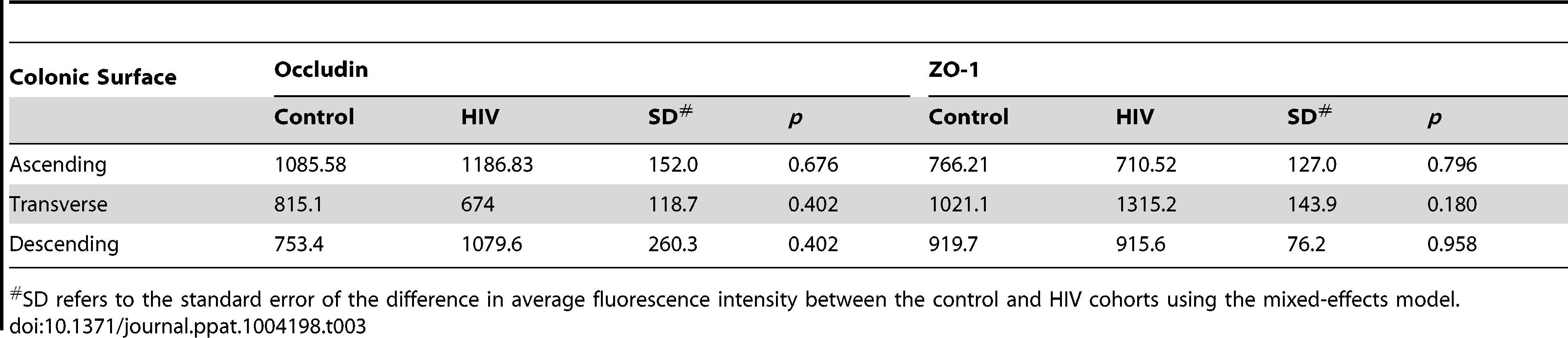 Average fluorescence intensity for occludin and ZO-1 staining of colonic surface epithelium sections.