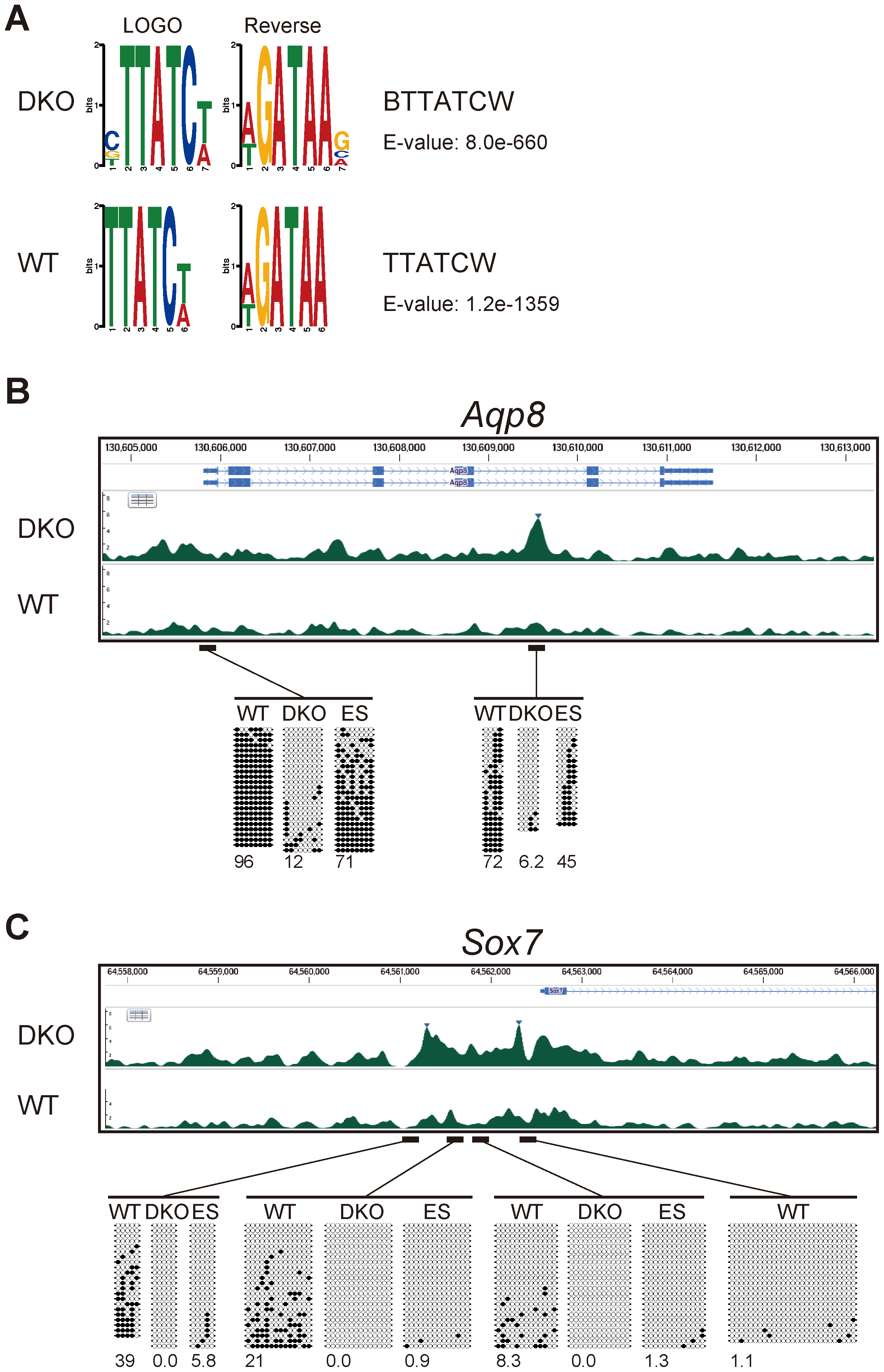 Gata4-binding site and DNA-methylation analyses of Gata4-response genes.