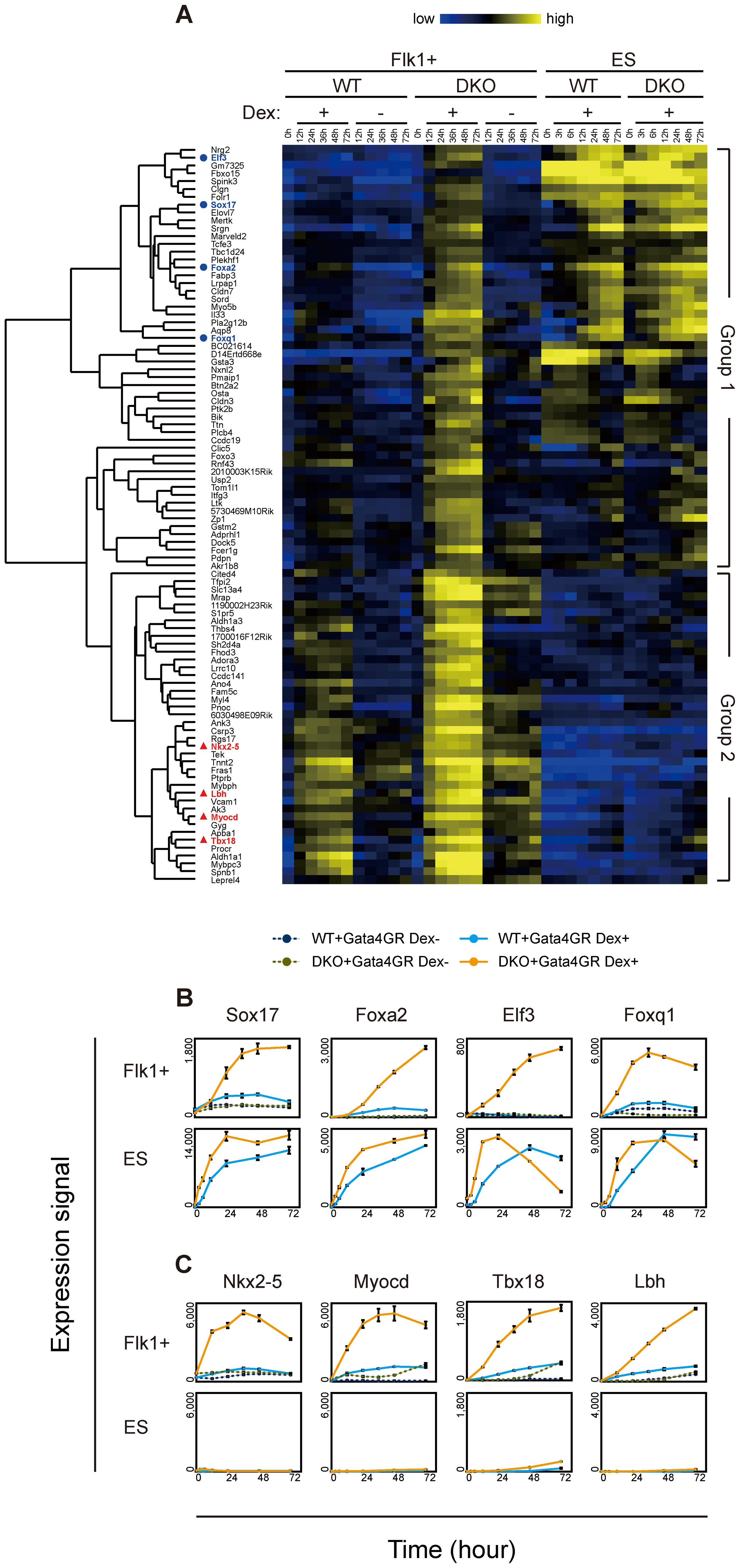 Time course analysis of transcriptome changes in response to Gata4.