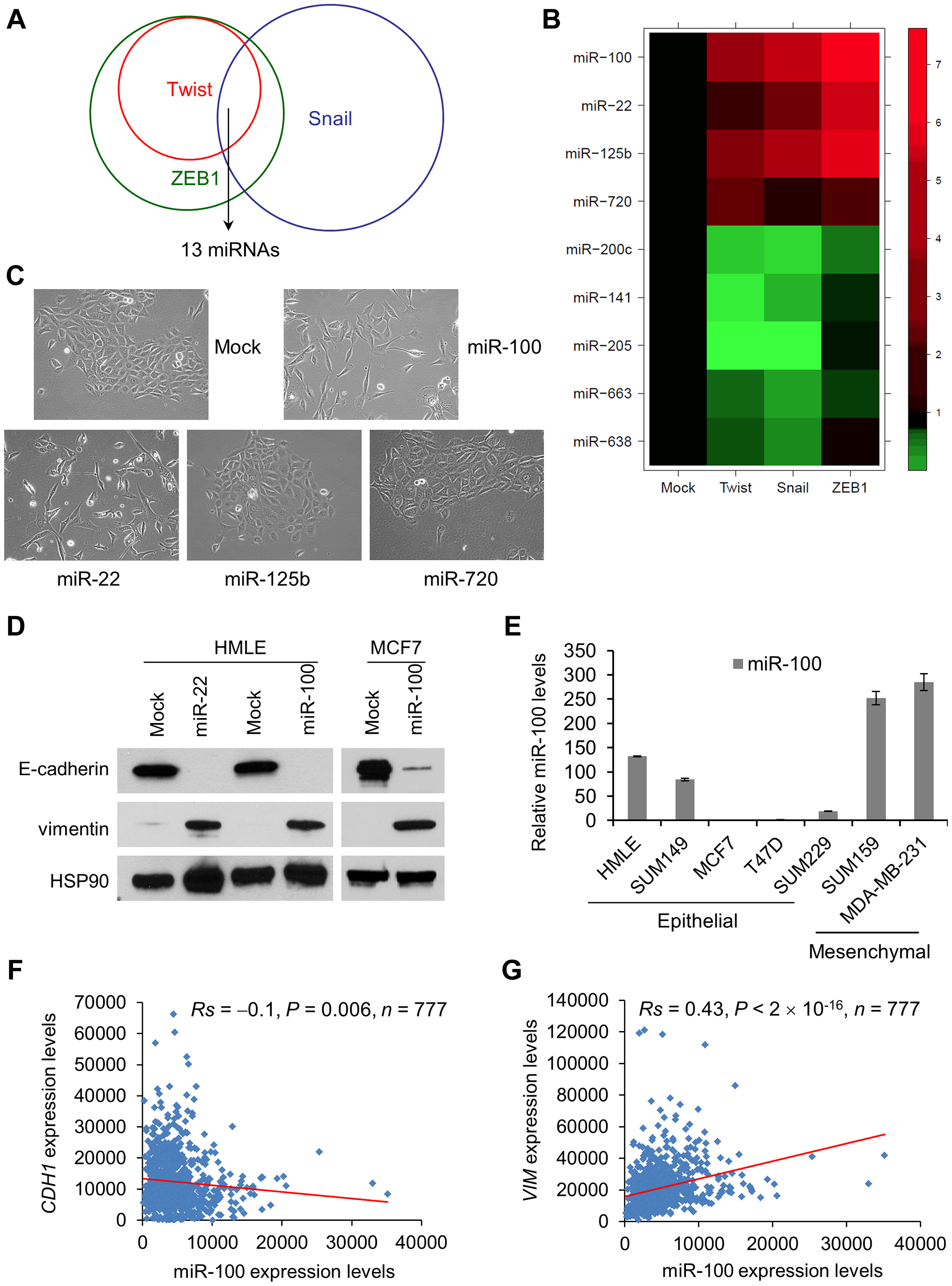 miR-100 induces EMT and correlates with the EMT state in human breast cancer.