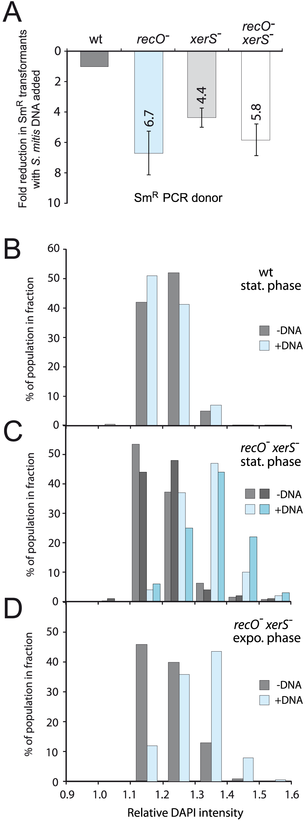 High frequency formation of chromosome dimers upon transformation with <i>S. mitis</i> chromosomal DNA.