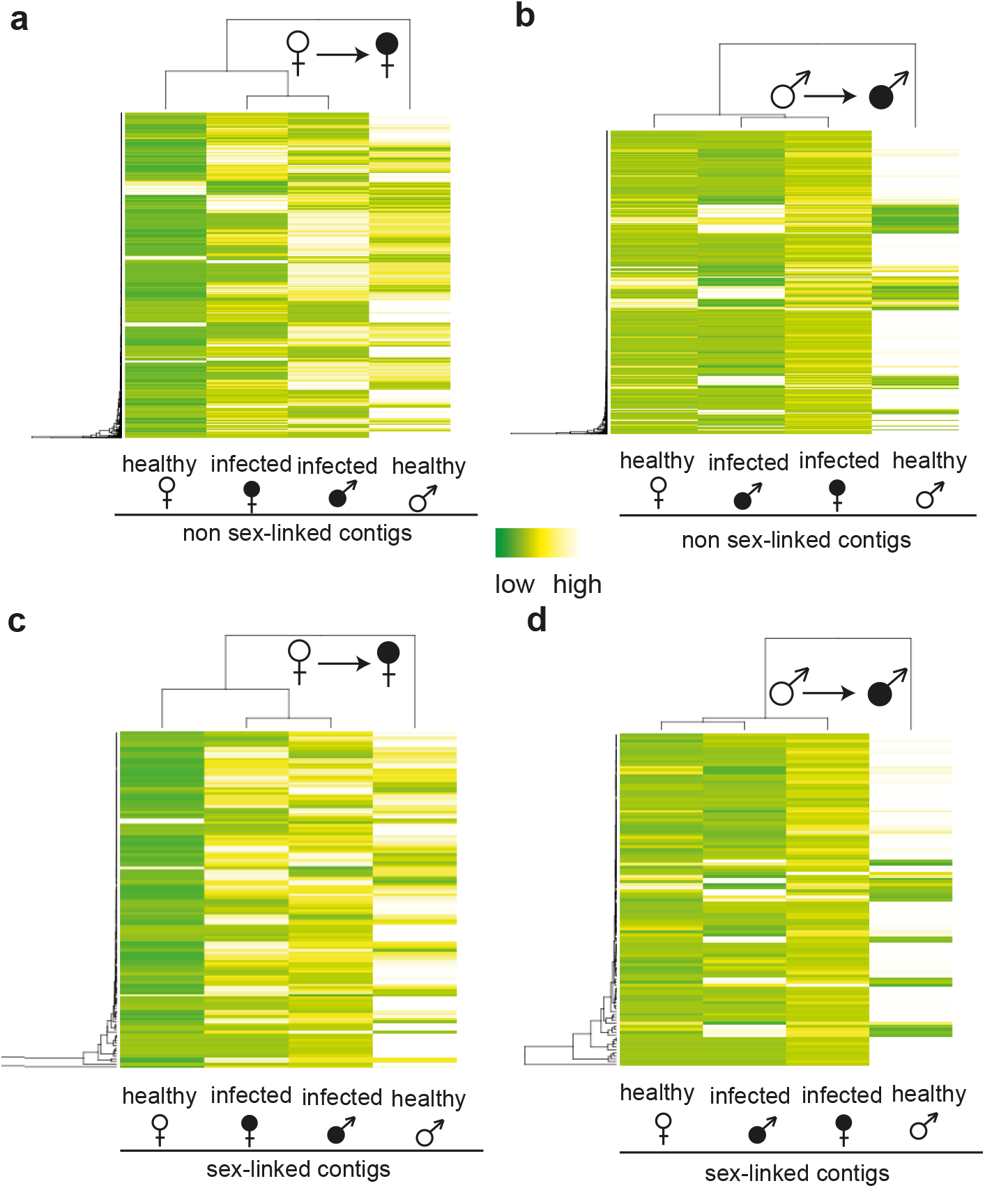 Heat maps and clustering of gene expression in non-infected and infected female and male <i>S</i>. <i>latifolia</i>.