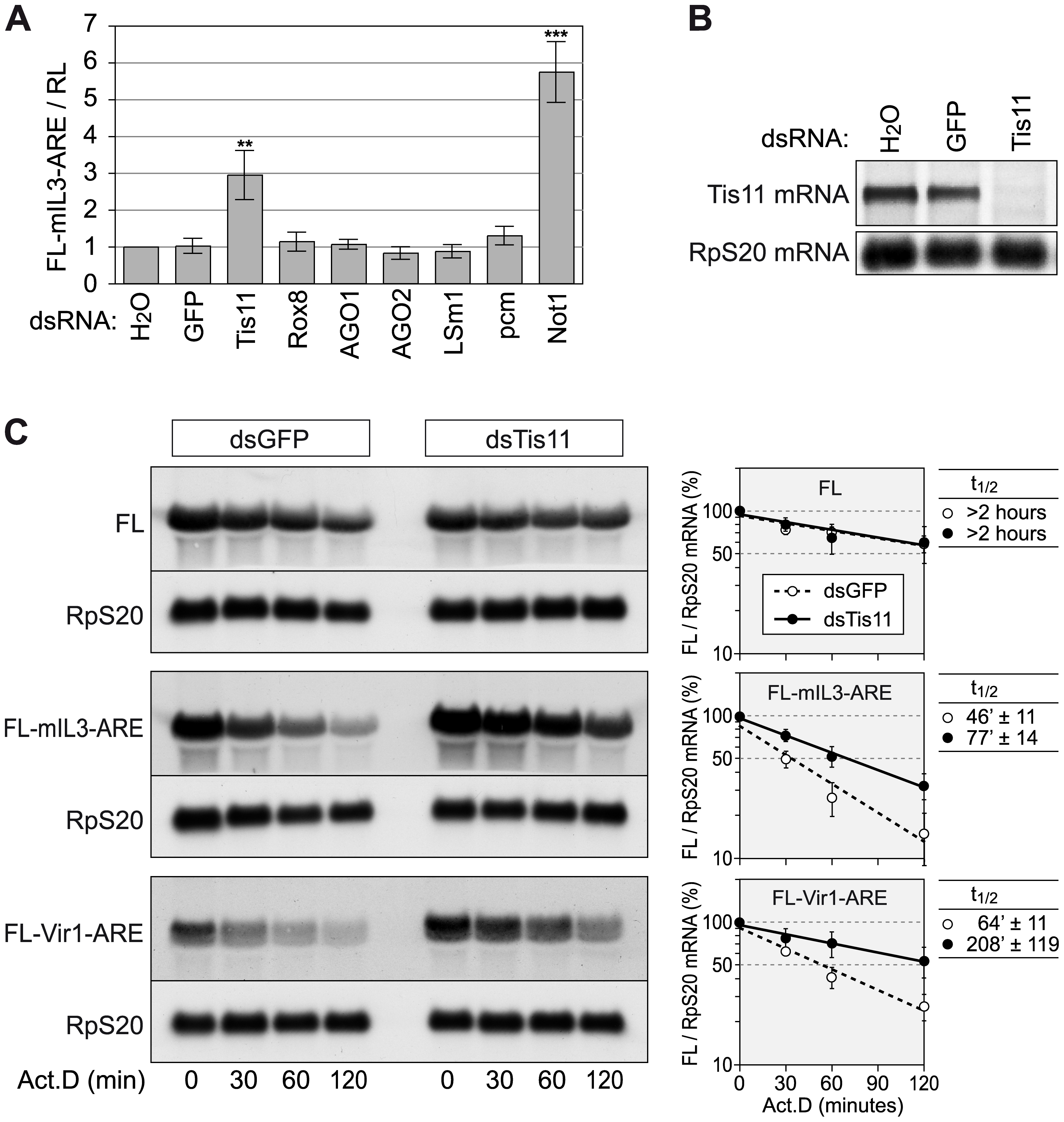 Tis11 mediates rapid mRNA degradation in <i>D. melanogaster</i> SL2 cells.