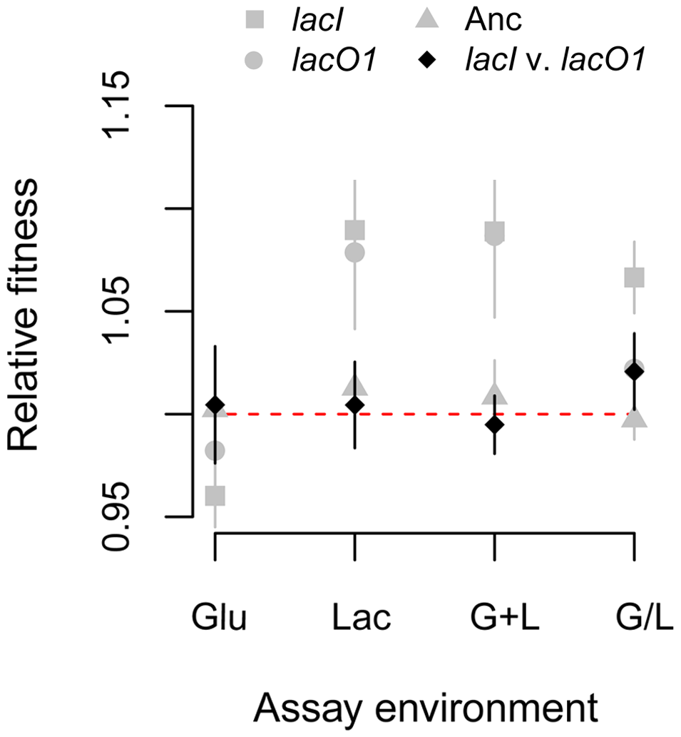 Effect of <i>lac</i> mutations on fitness.