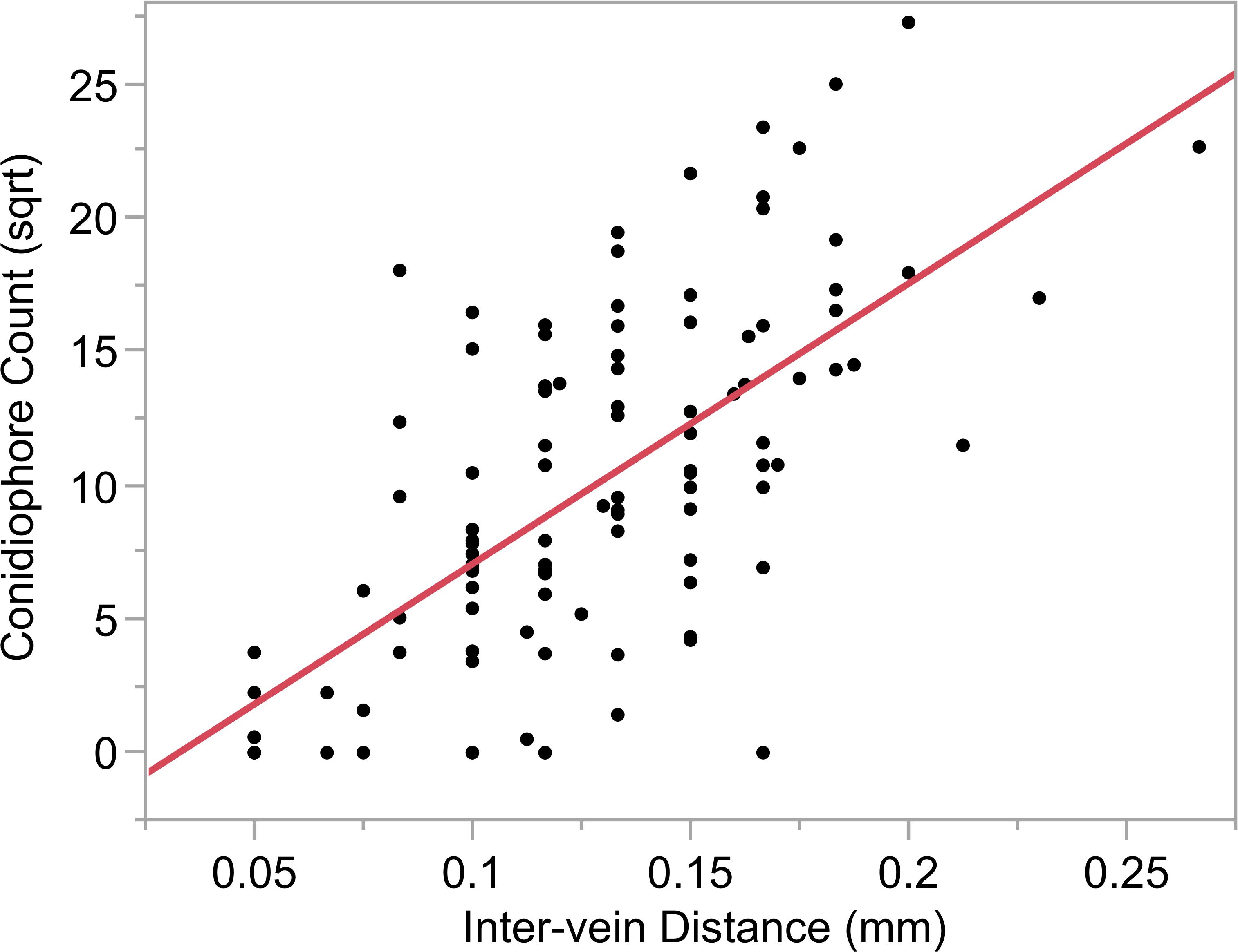 Relationship between conidiophore count and intervein distance.