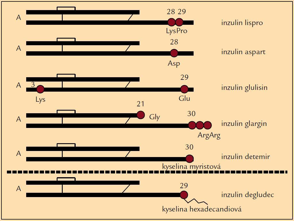 Schéma molekulárních změn u inzulinových analogů.
