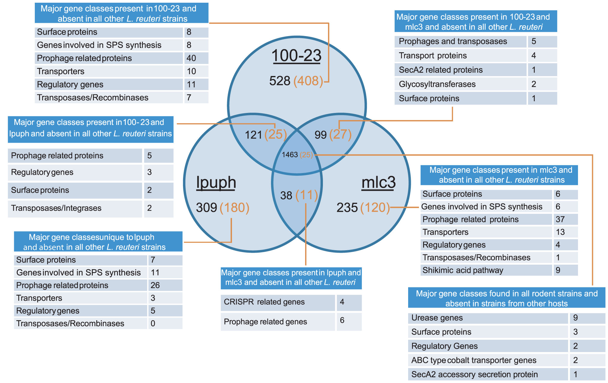 The pan-genome of <i>L. reuteri</i> strains originating from rodents.