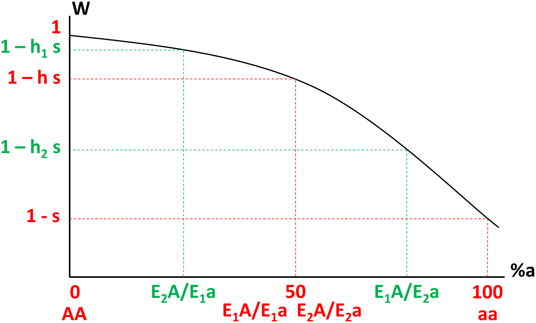 Variation of fitness (W, y-axis) as a function of the percentage of defective proteins noted %a (x-axis, from 0% in AA homozygotes to 100% in aa homozygotes) in different genotypes, where E1 and E2 are the weaker and stronger enhancer alleles respectively (e<sub>2</sub> &gt; e<sub>1</sub>).