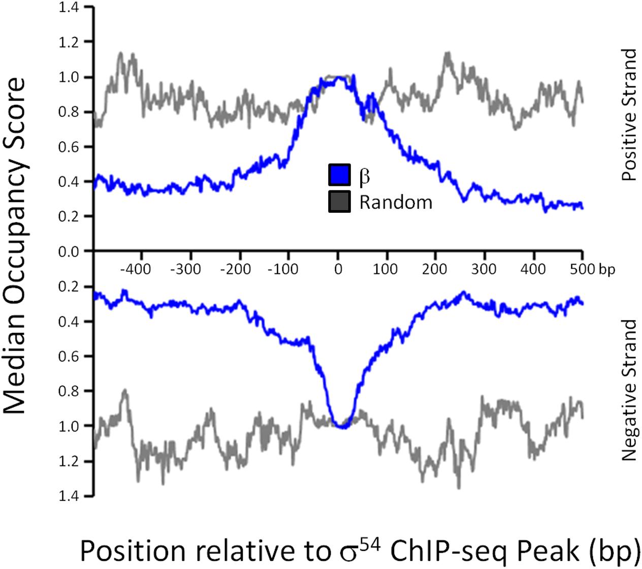 RNAP distribution at σ<sup>54</sup> binding sites.