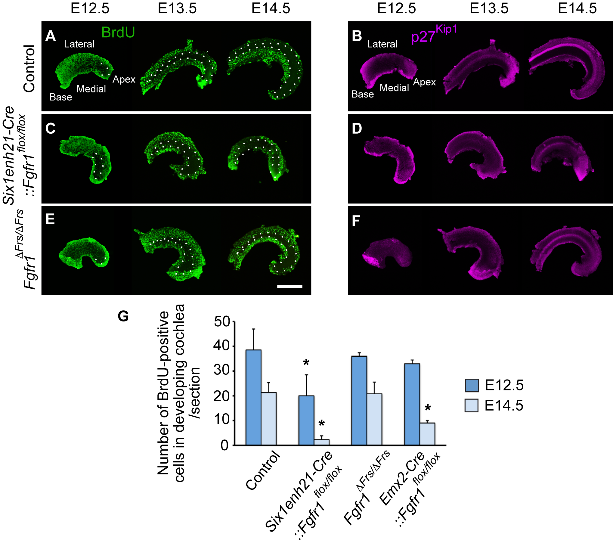 FGFR1-mediated cell proliferation is not mediated by Frs2/3 interaction.