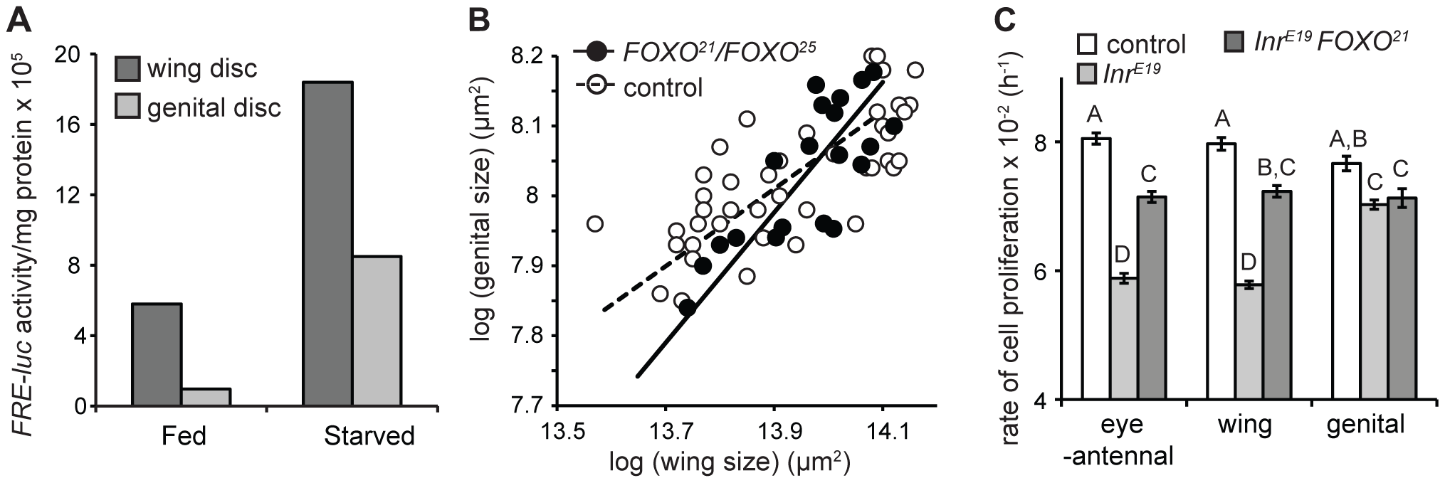 FOXO is necessary to maintain organ-specific nutritional plasticity and insulin sensitivity.