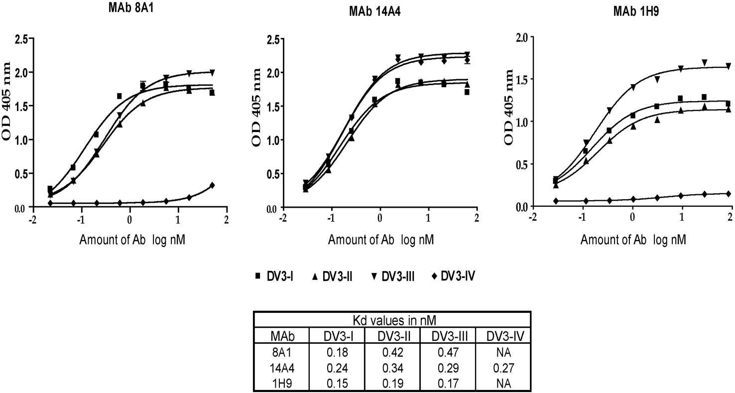 Binding of mouse MAbs to DENV3 genotypes.