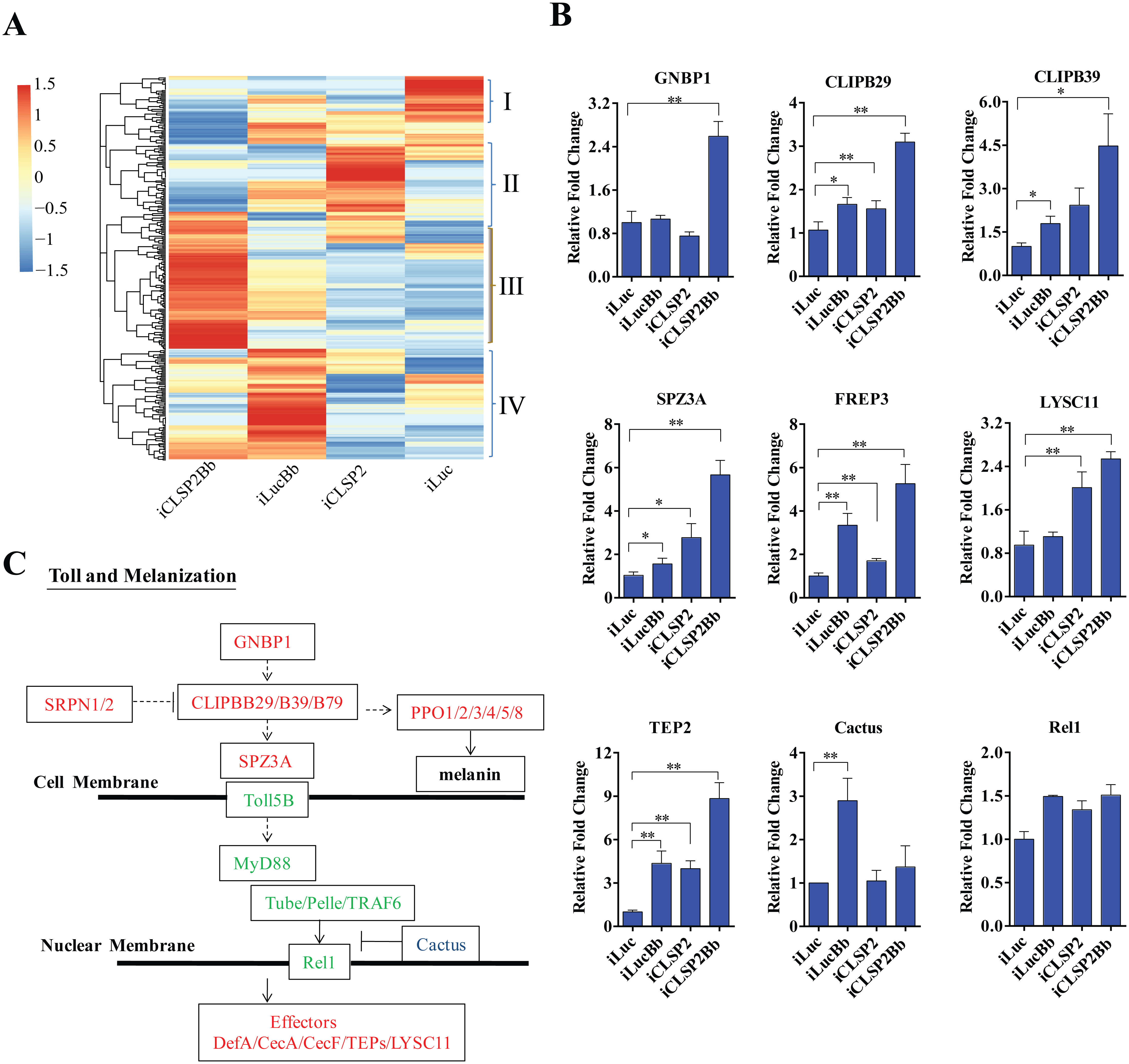 Transcriptome analysis of CLSP2 modulation of <i>Ae</i>. <i>aegypti</i> immune genes.