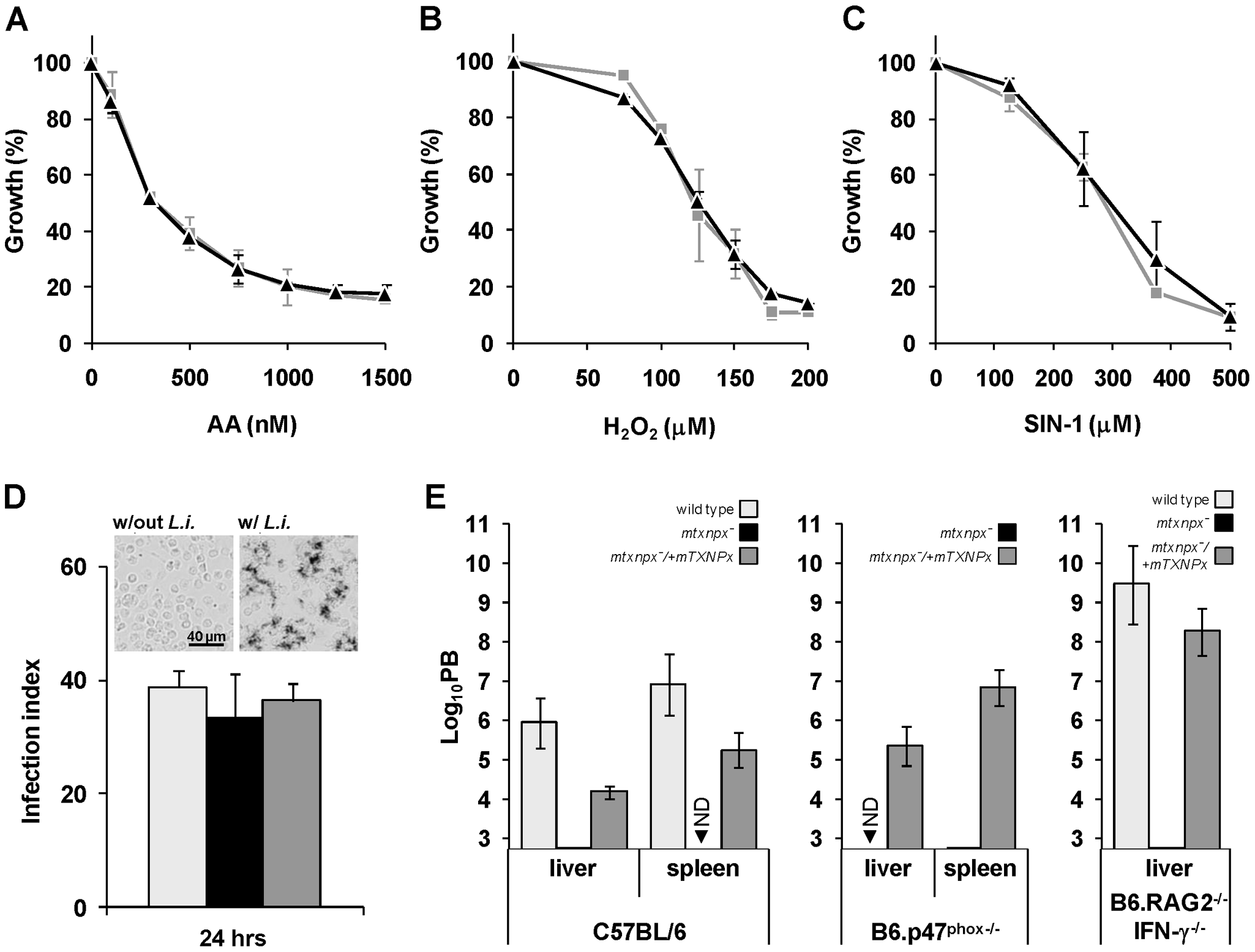 Depletion of mTXNPx has no impact on the antioxidant capacity of promastigotes.