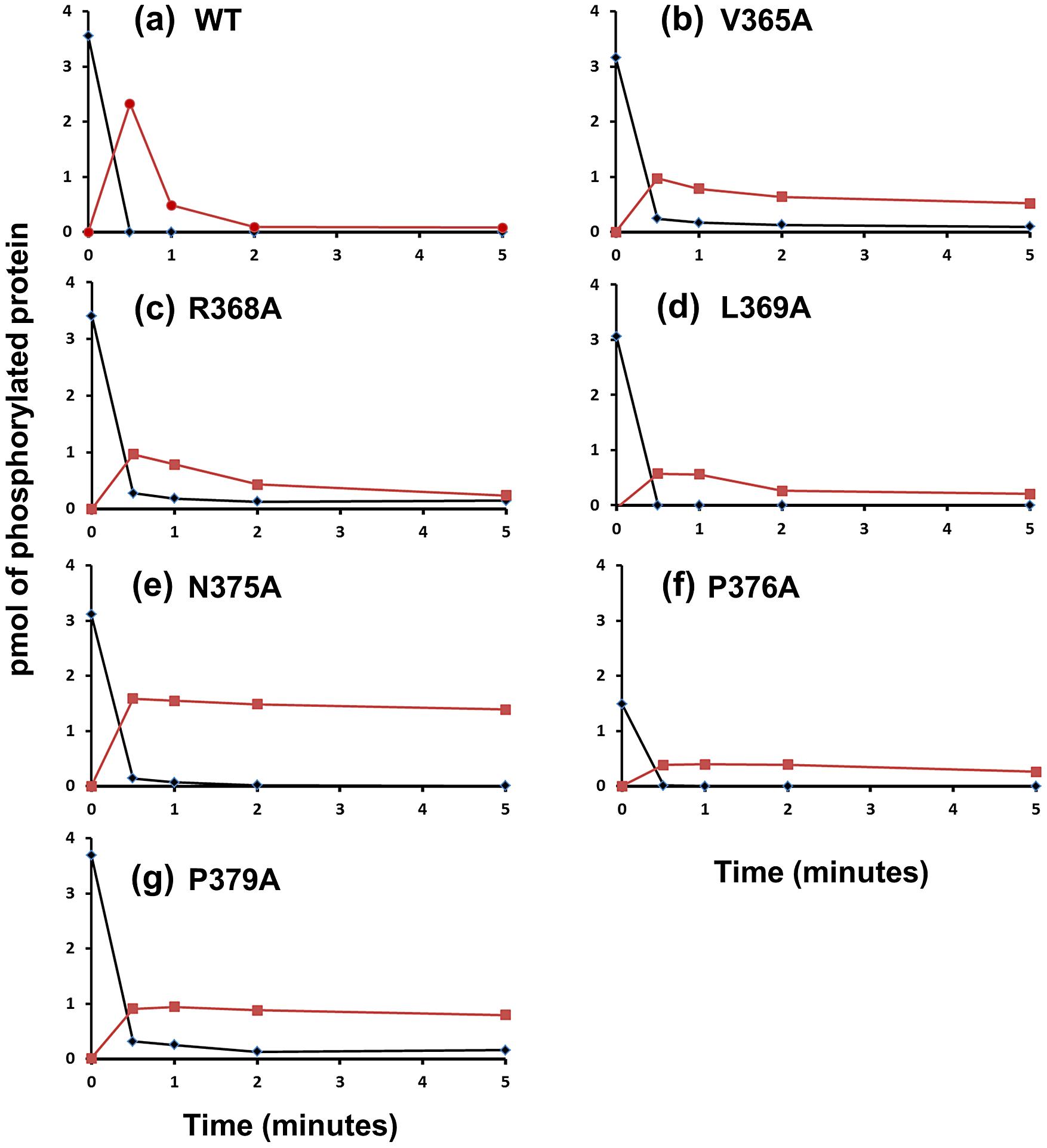 Phosphotransfer Assays with Phosphatase Mutants.