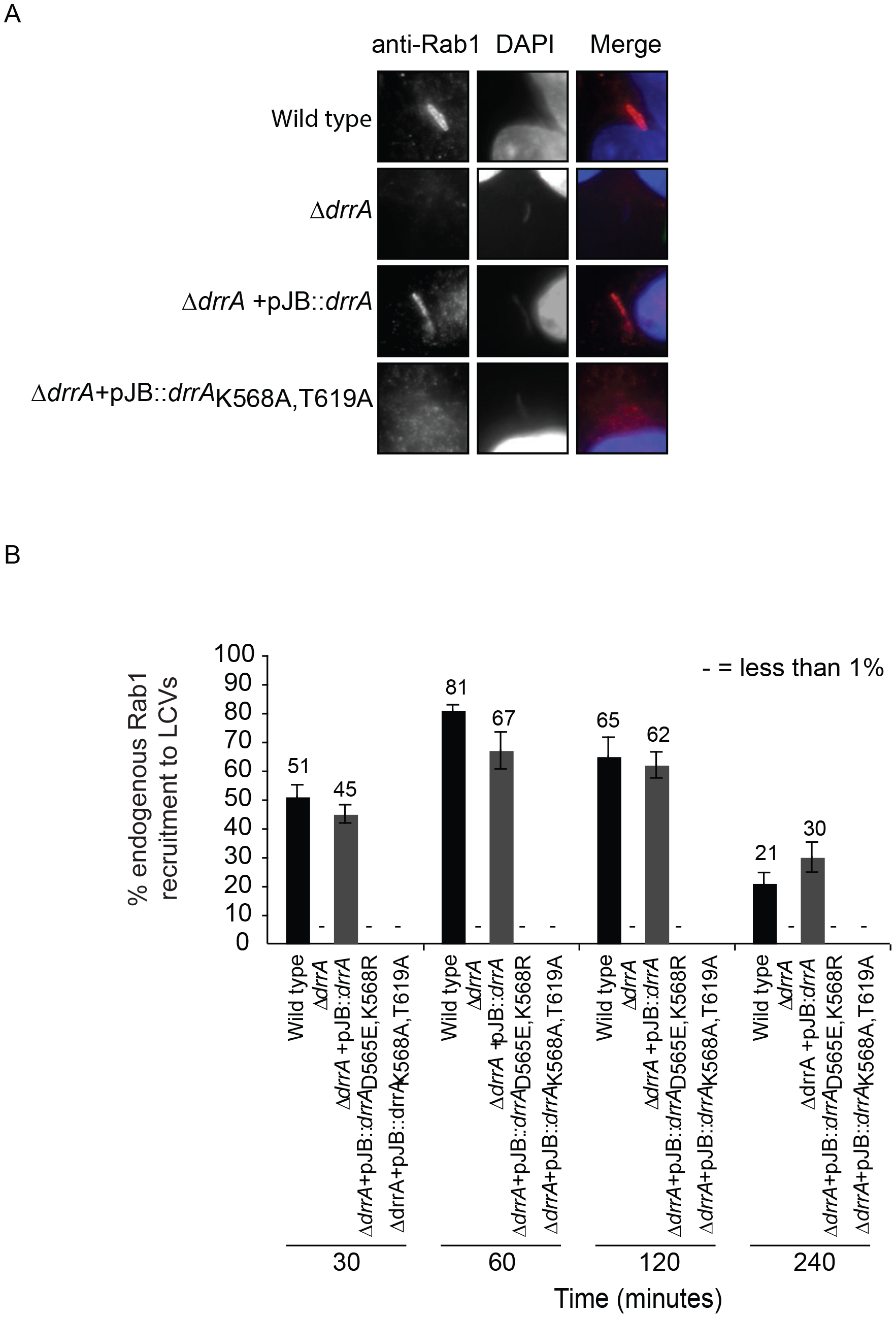 Targeting of DrrA by PI4P-binding is functionally important during <i>L. pneumophila</i> infection because it is required for localization of DrrA and Rab1 to <i>Legionella-</i>containing vacuoles.