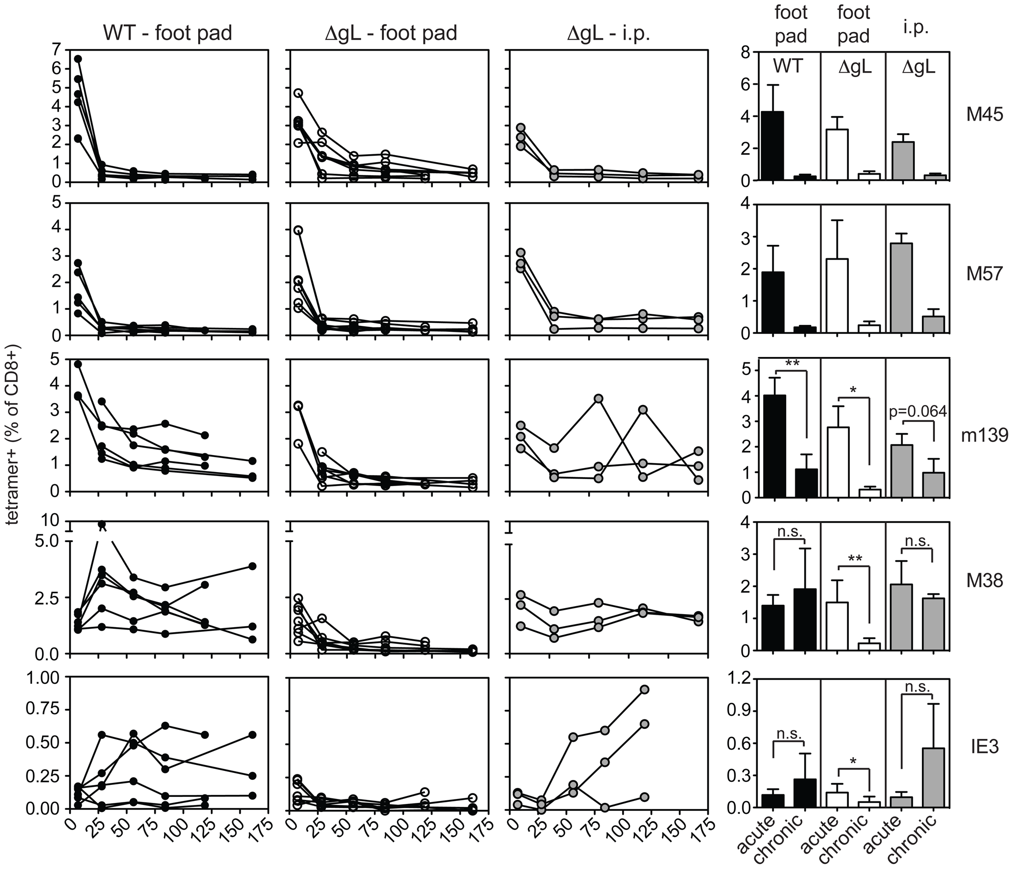 Foot pad injection of ΔgL MCMV fails to result in maintenance or inflation of m139-, M38- or IE3-specific CD8+ T cells.