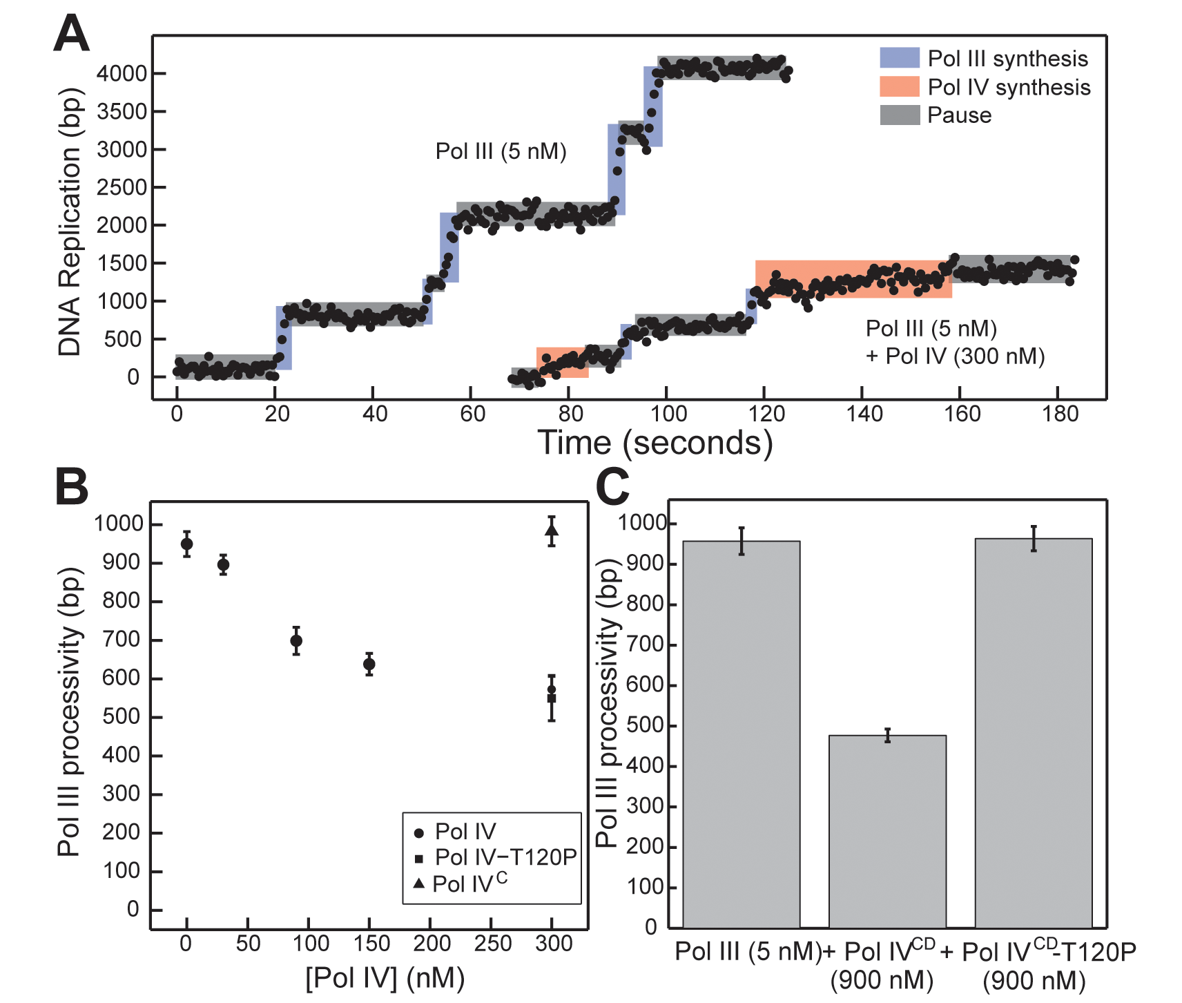 Pol IV<sup>CD</sup>-T120P, but not full length Pol IV-T120P, fails to inhibit Pol III processivity <i>in vitro</i>.